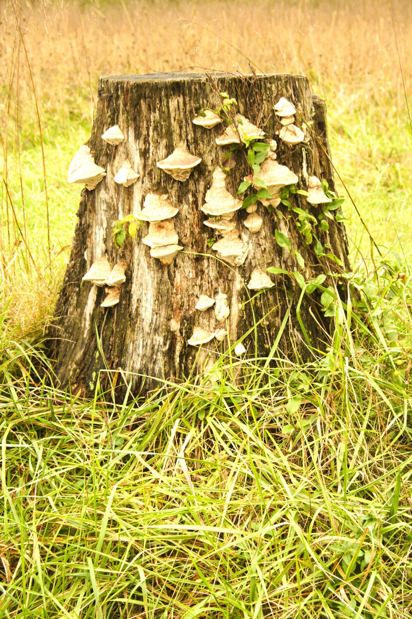 Tree Stump by christy
