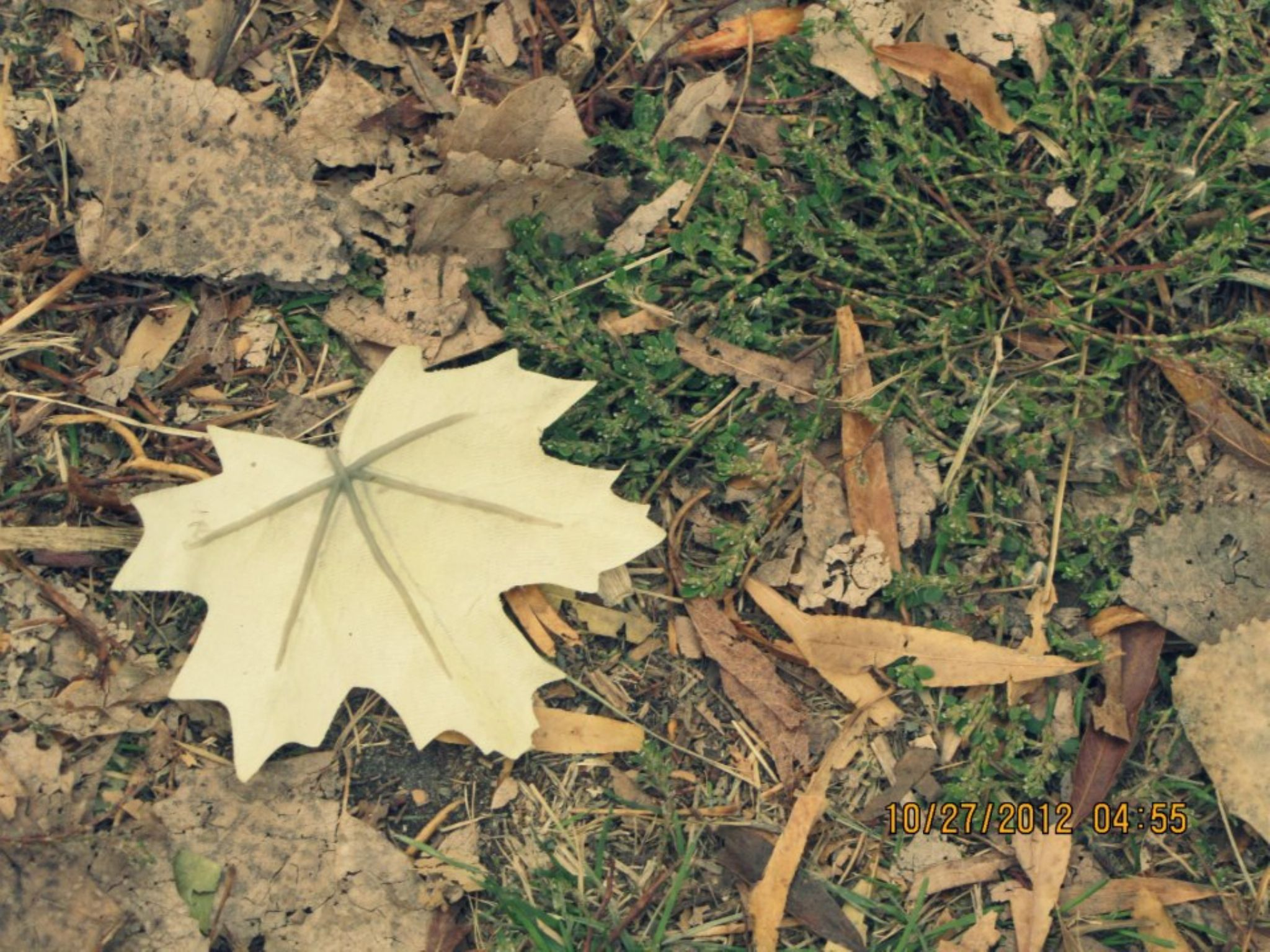 Leaf in Fall by Brianna Humphrey