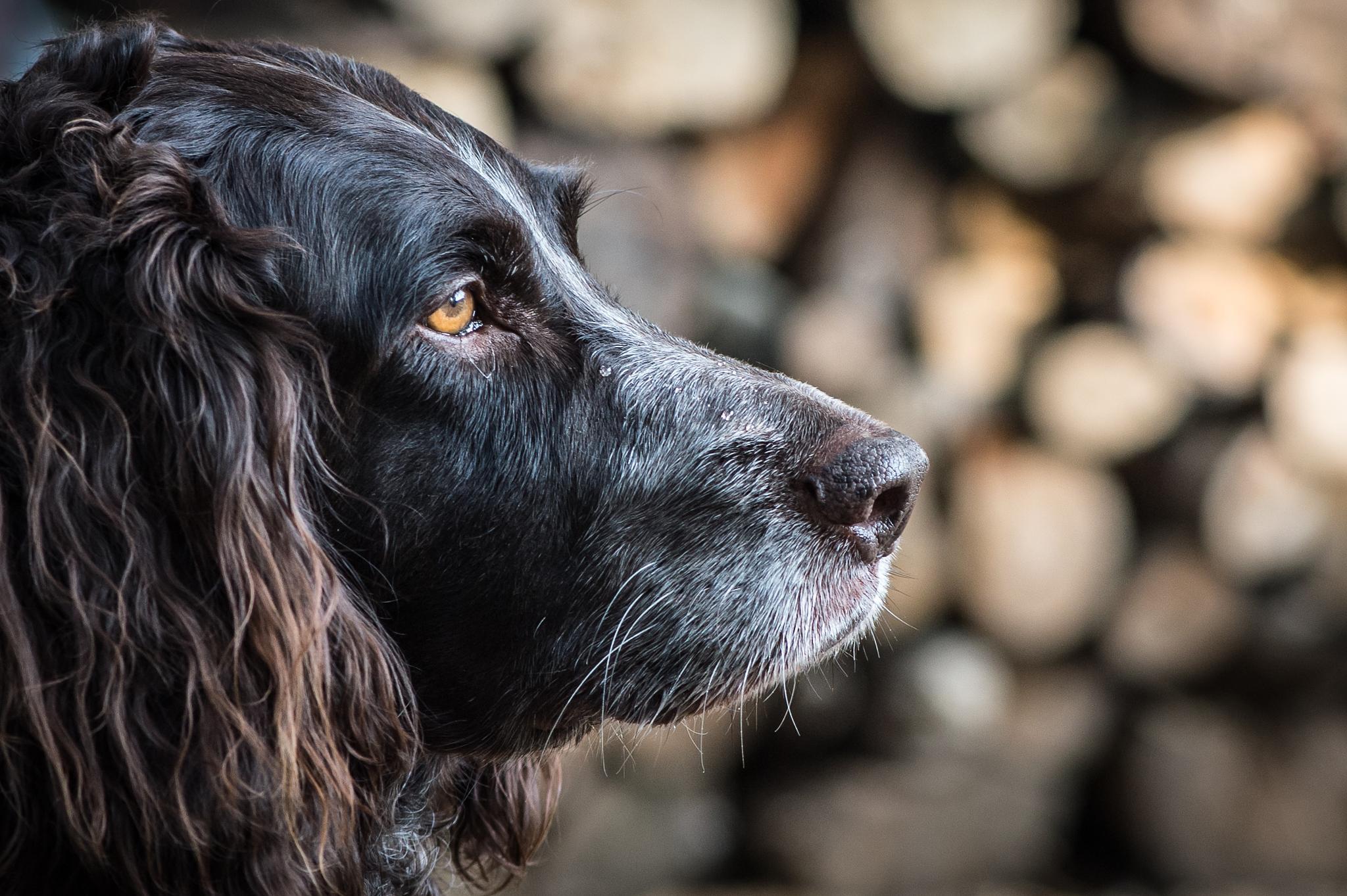 Kai, the dog by Jean-Marc Schneider
