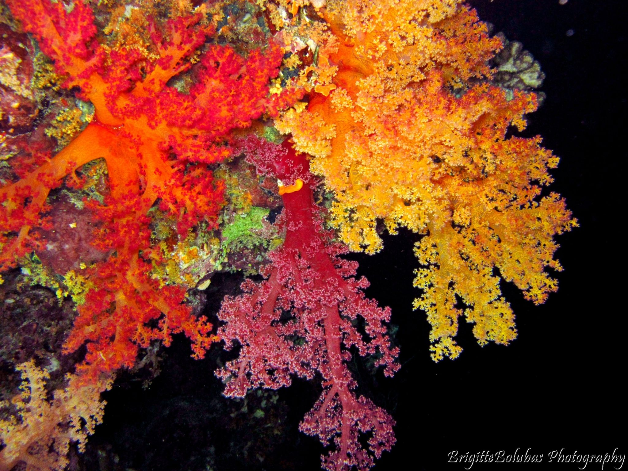 Soft coral by LiliomToursBrigitta