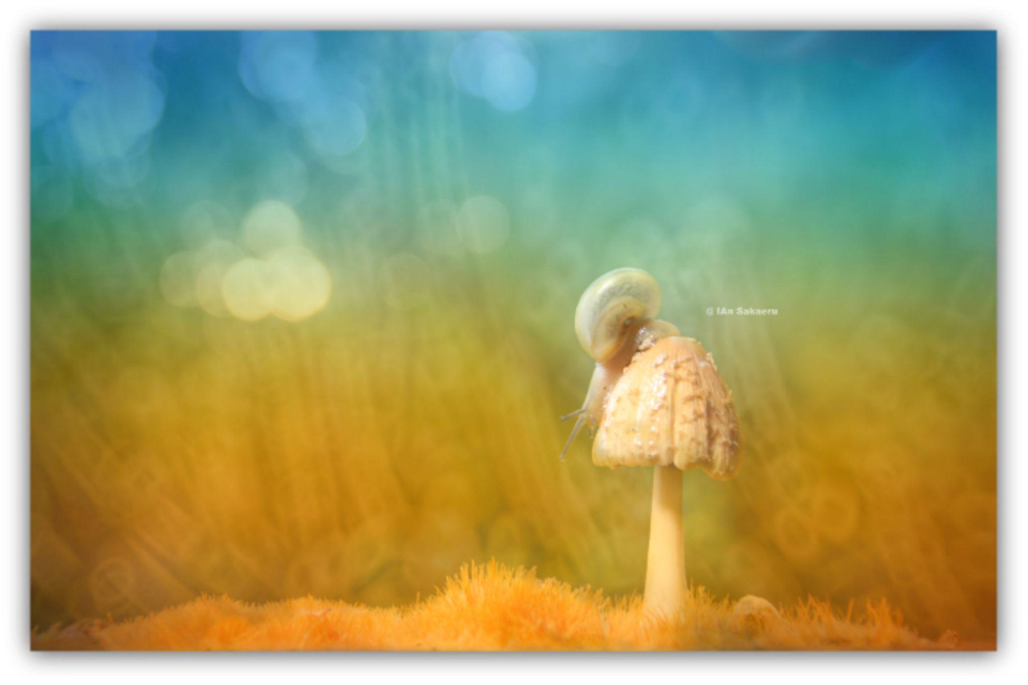 alone by IAn Sakaeru