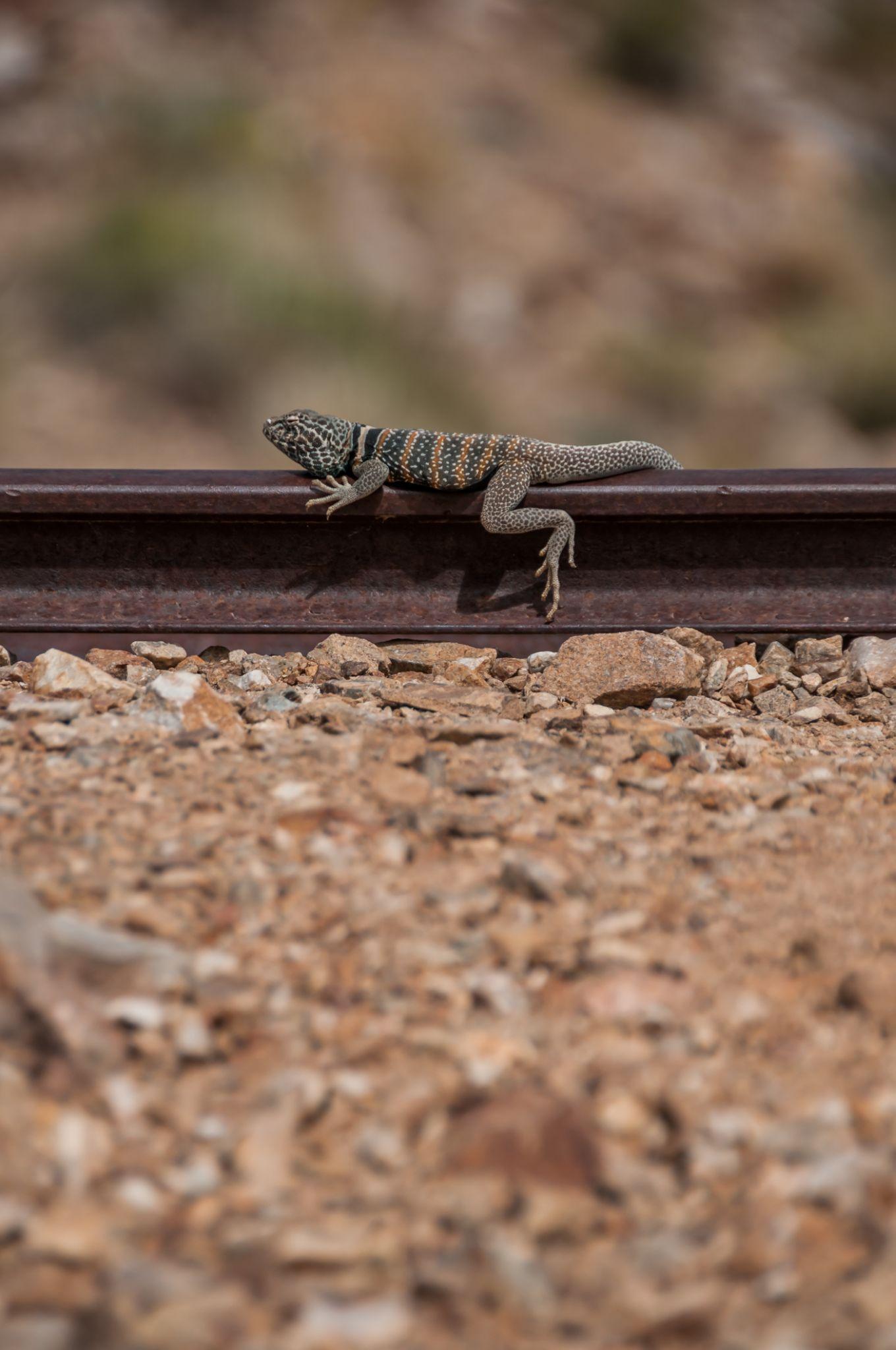 No train around by Martina Havlickova