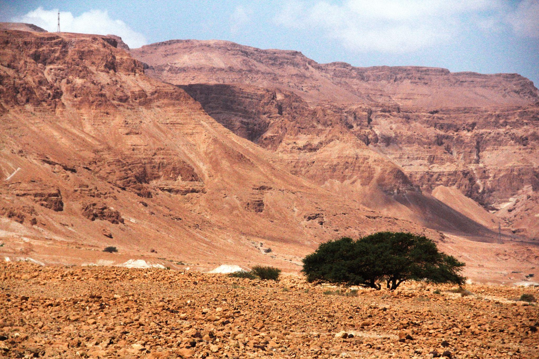 Judaean Desert, Israel by irynam
