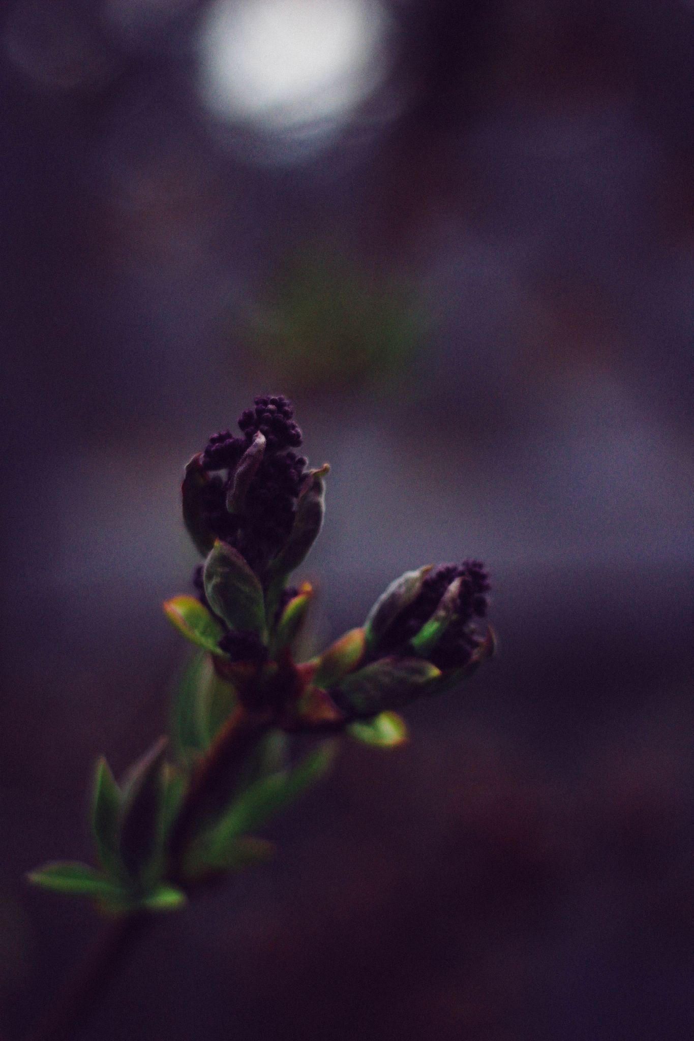 Early spring by irynam