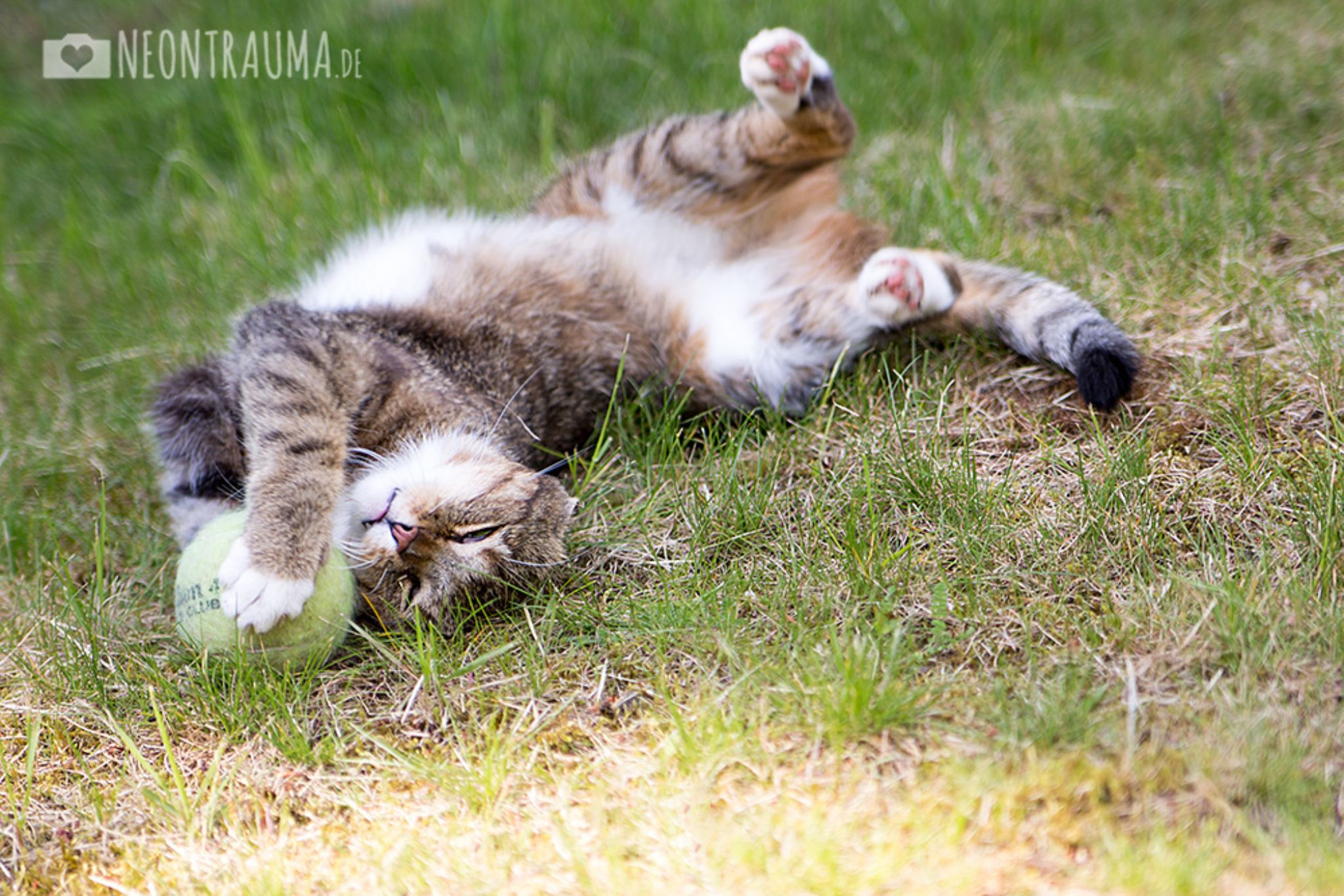 Our cat playing with the dog's tennis ball by neontrauma