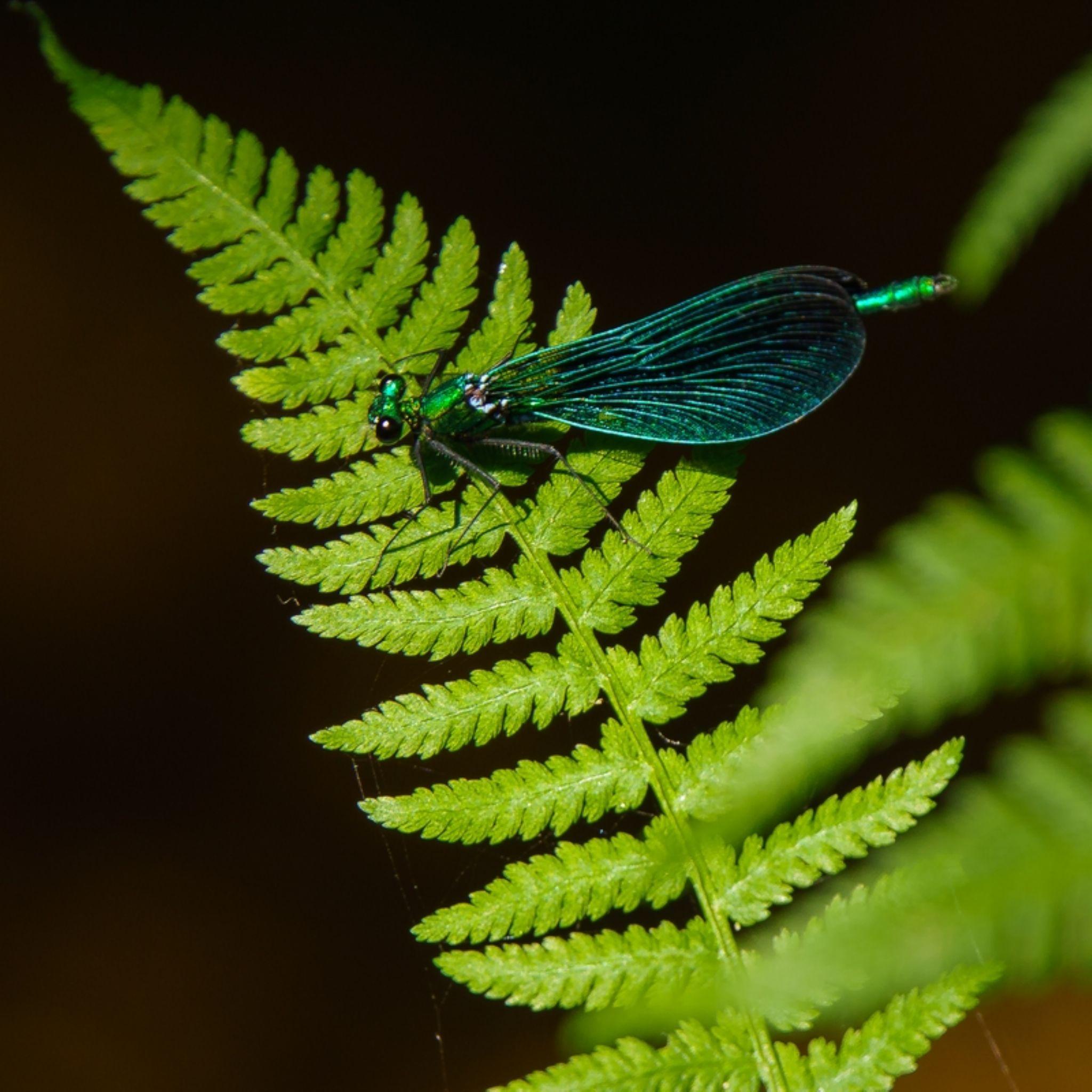 Libellule bleue by redladybird56