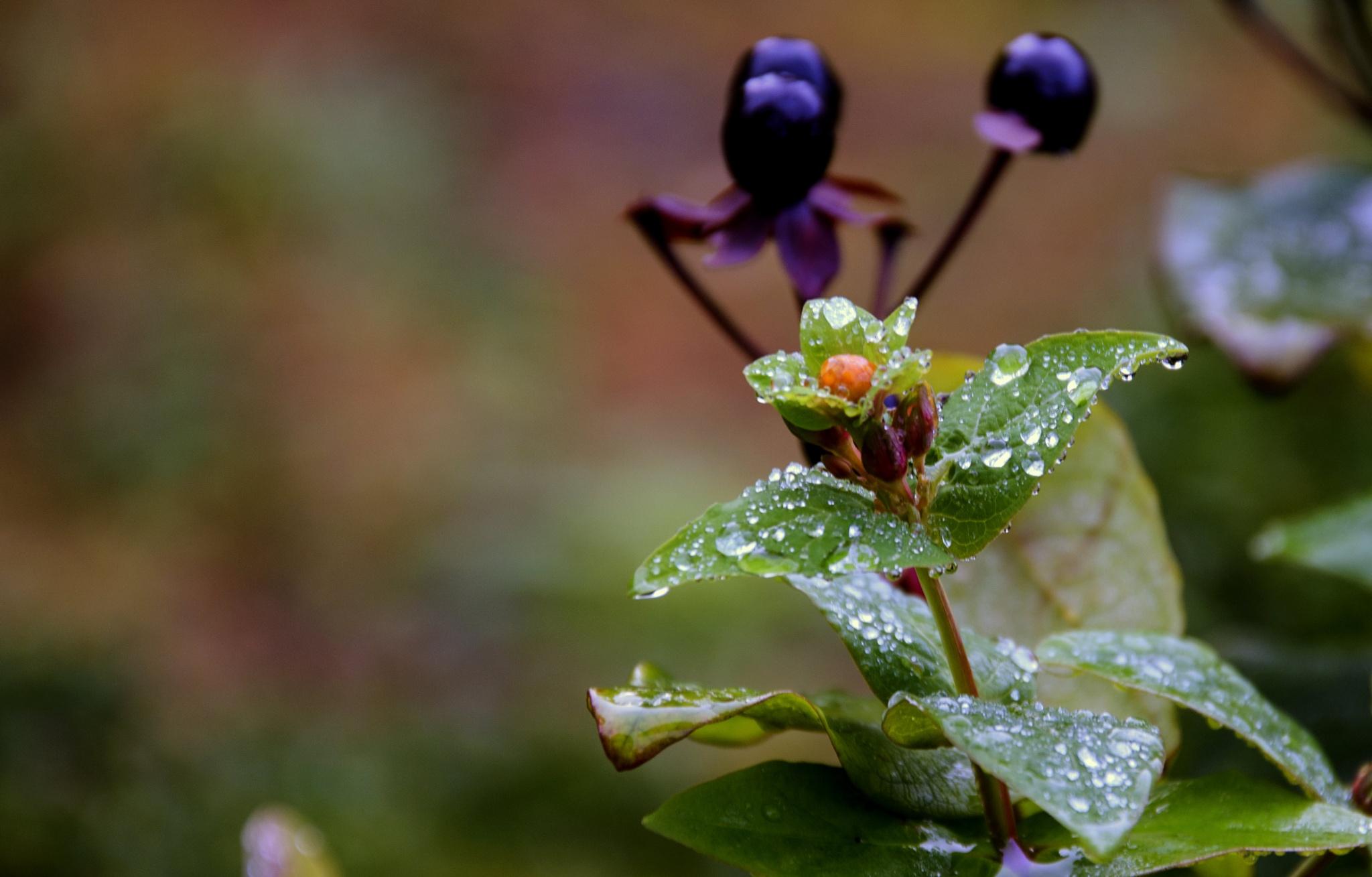 Pretty Colours in the Rain  by Doreen Kehoe