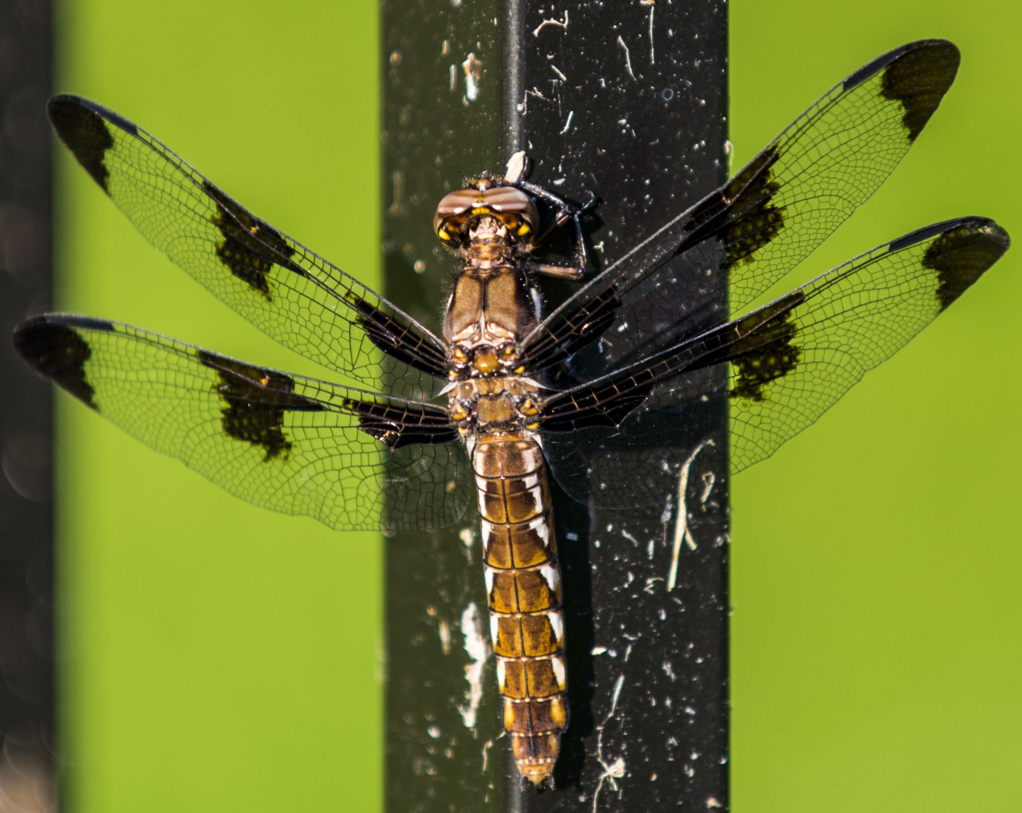 green dragonfly on fence post by Second-Glimpse Photography