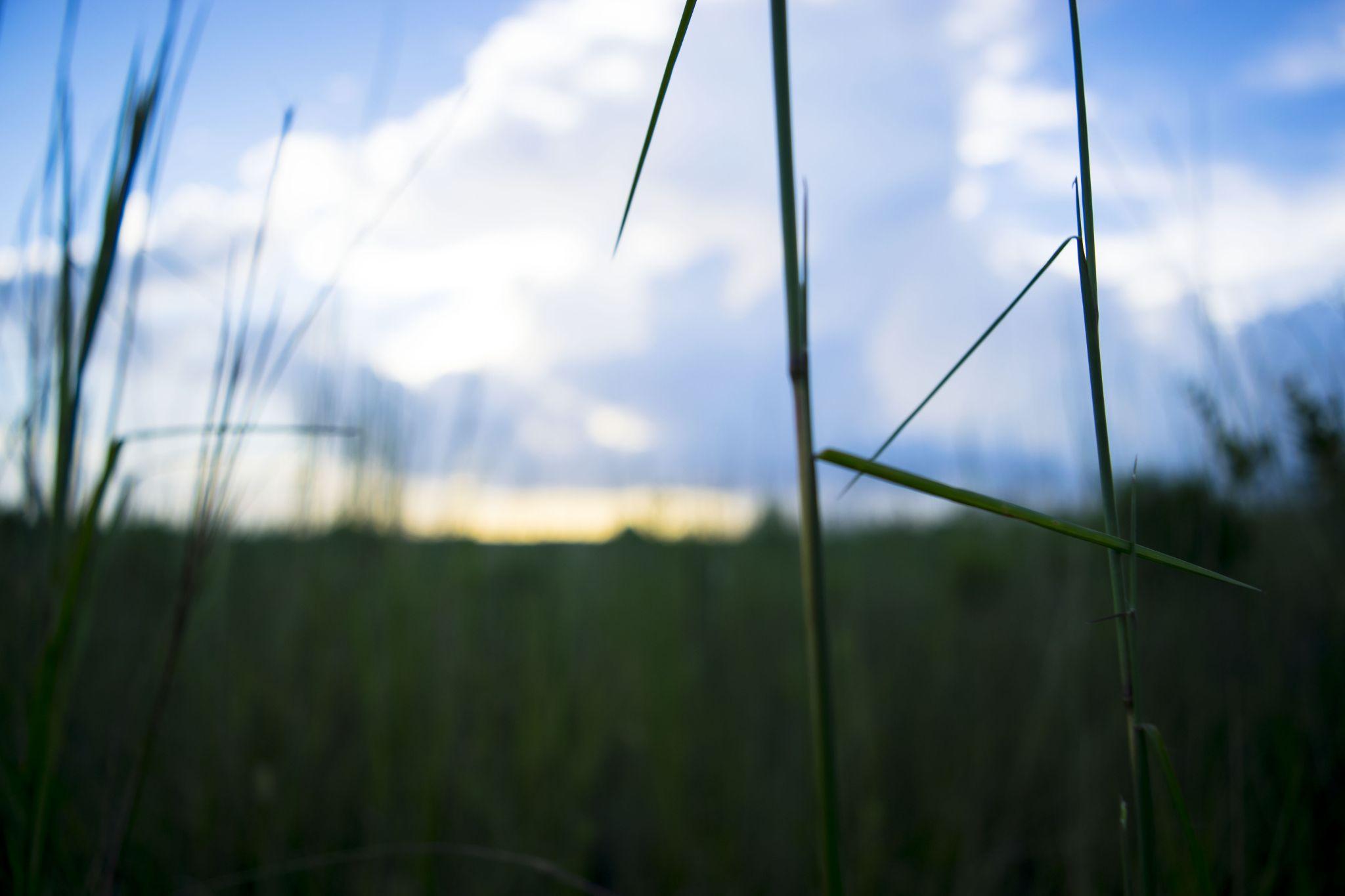 the plains by perdallion nixon