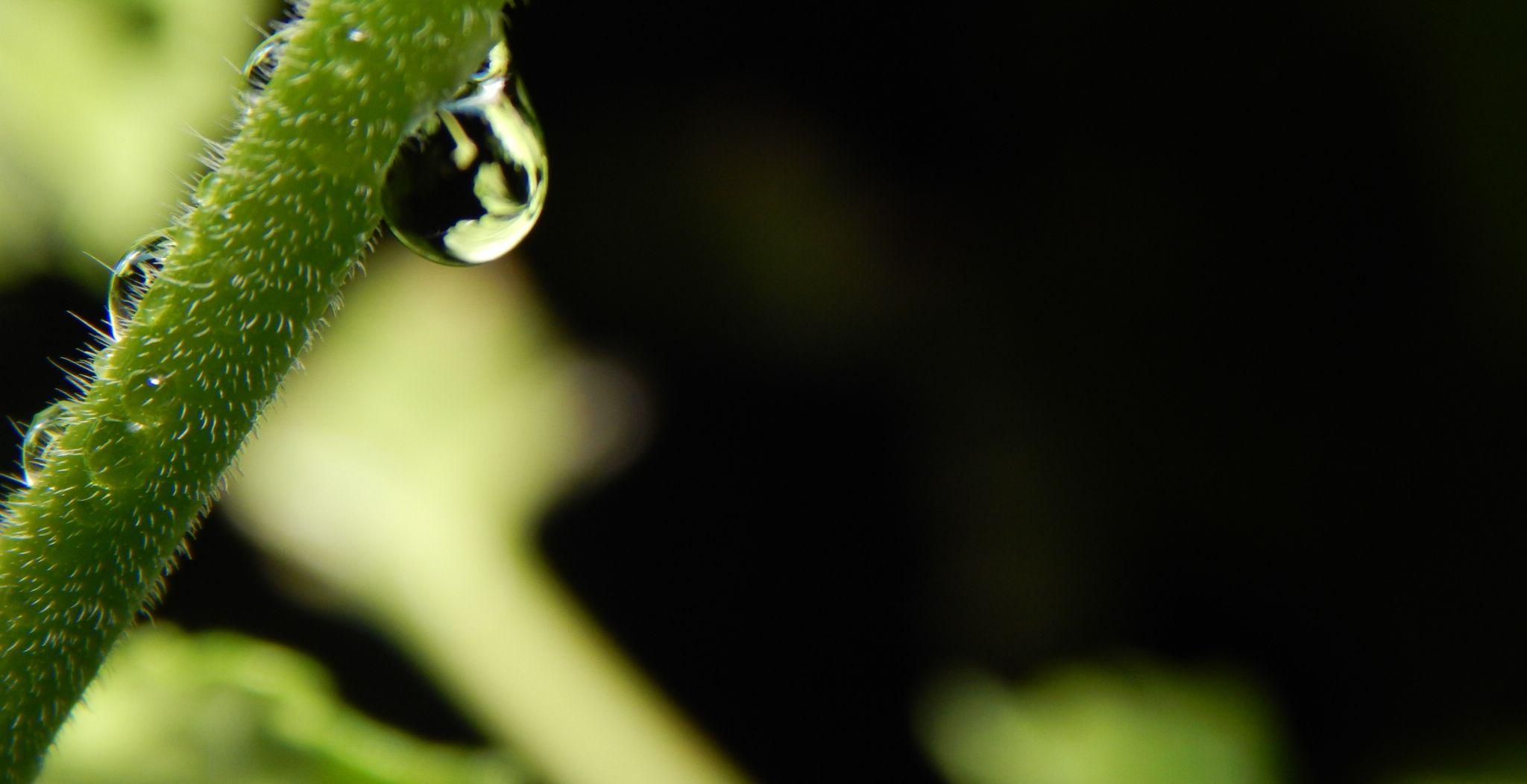 Water Drop by Cookie_Monster