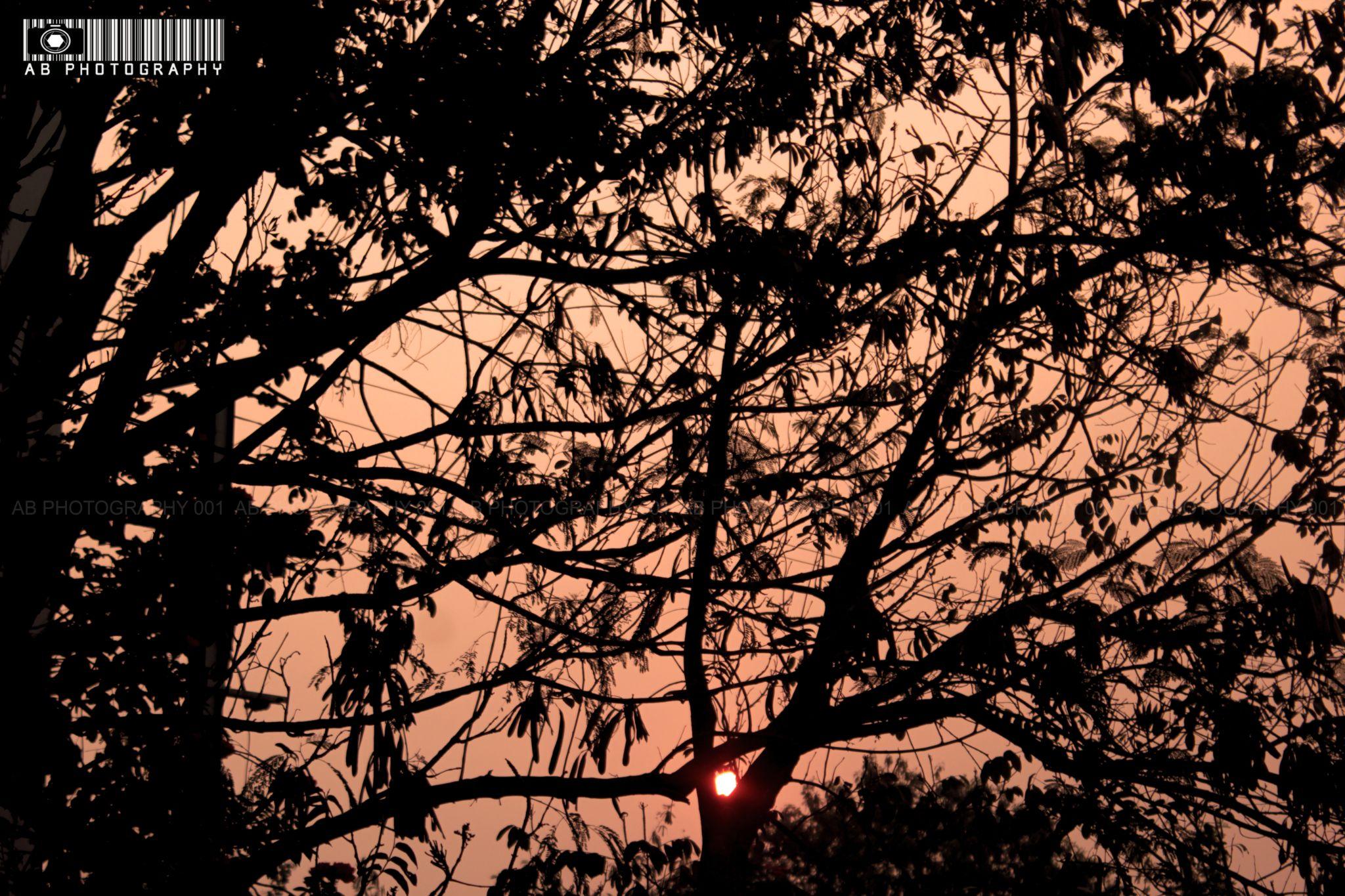 MORNING_SUNRISE by ABHILASHKODALI