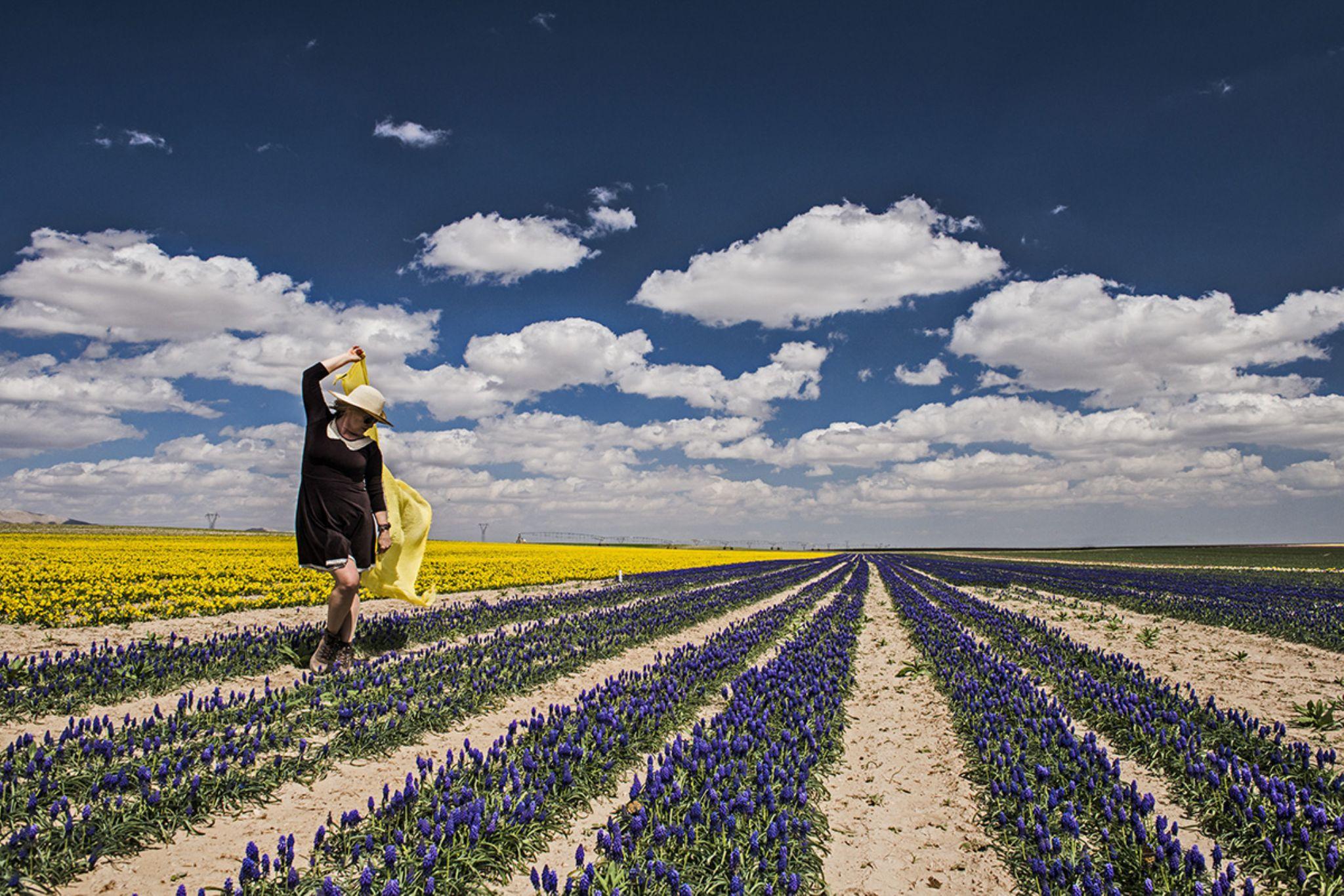 Tulip garden by mustafaozdemirphotography