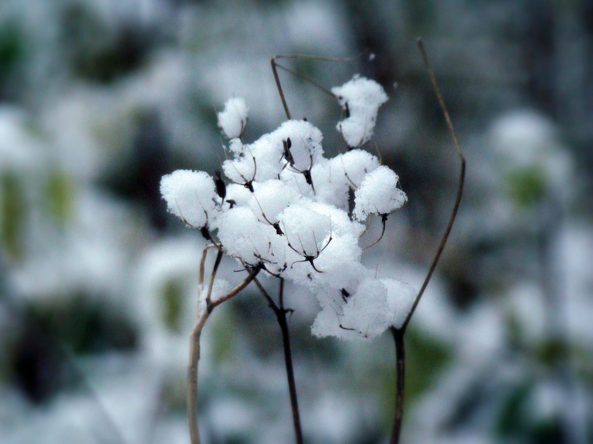 First snow by tuijakarhinen