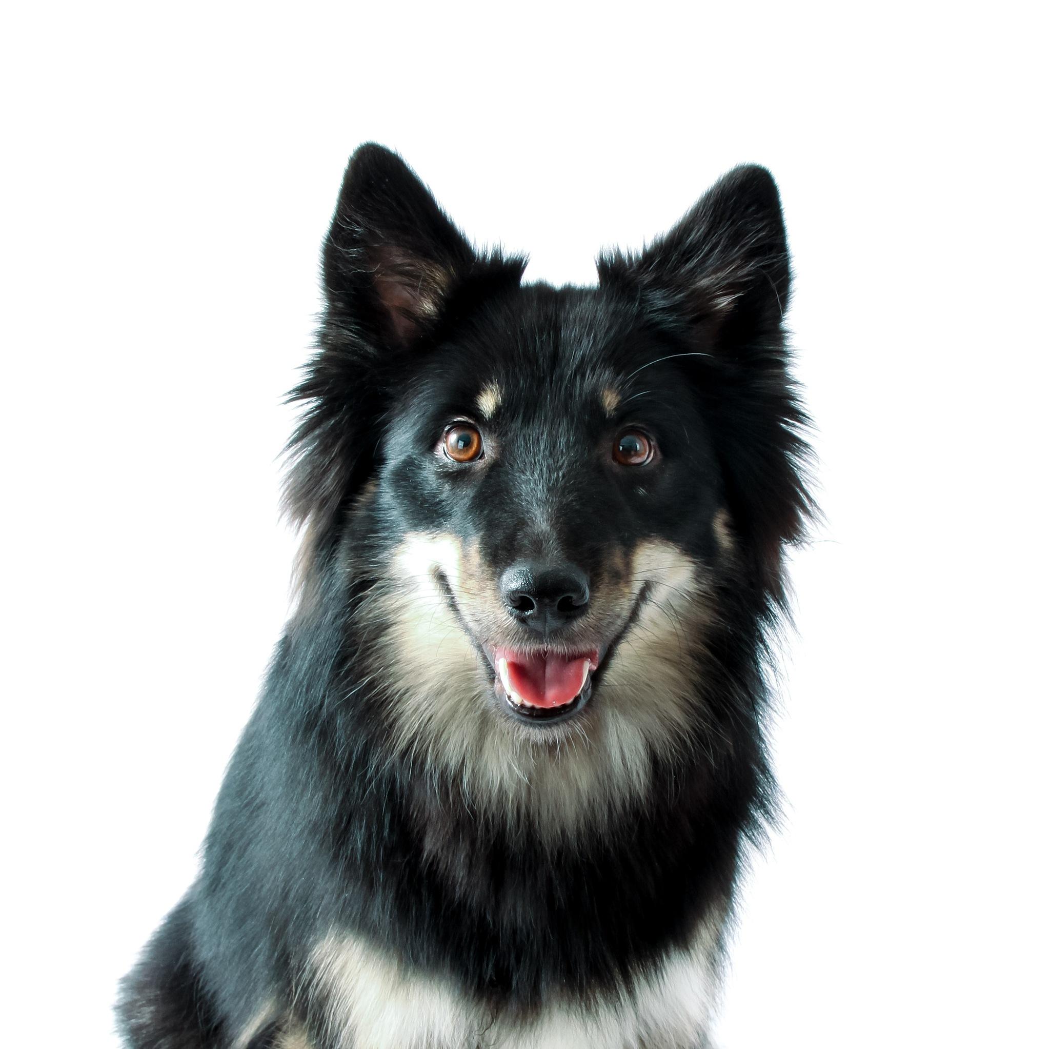 Happy dog by tuijakarhinen