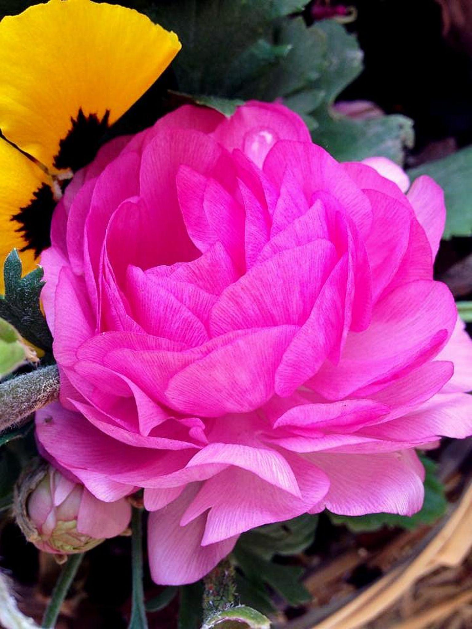 flower by Georginaphotography