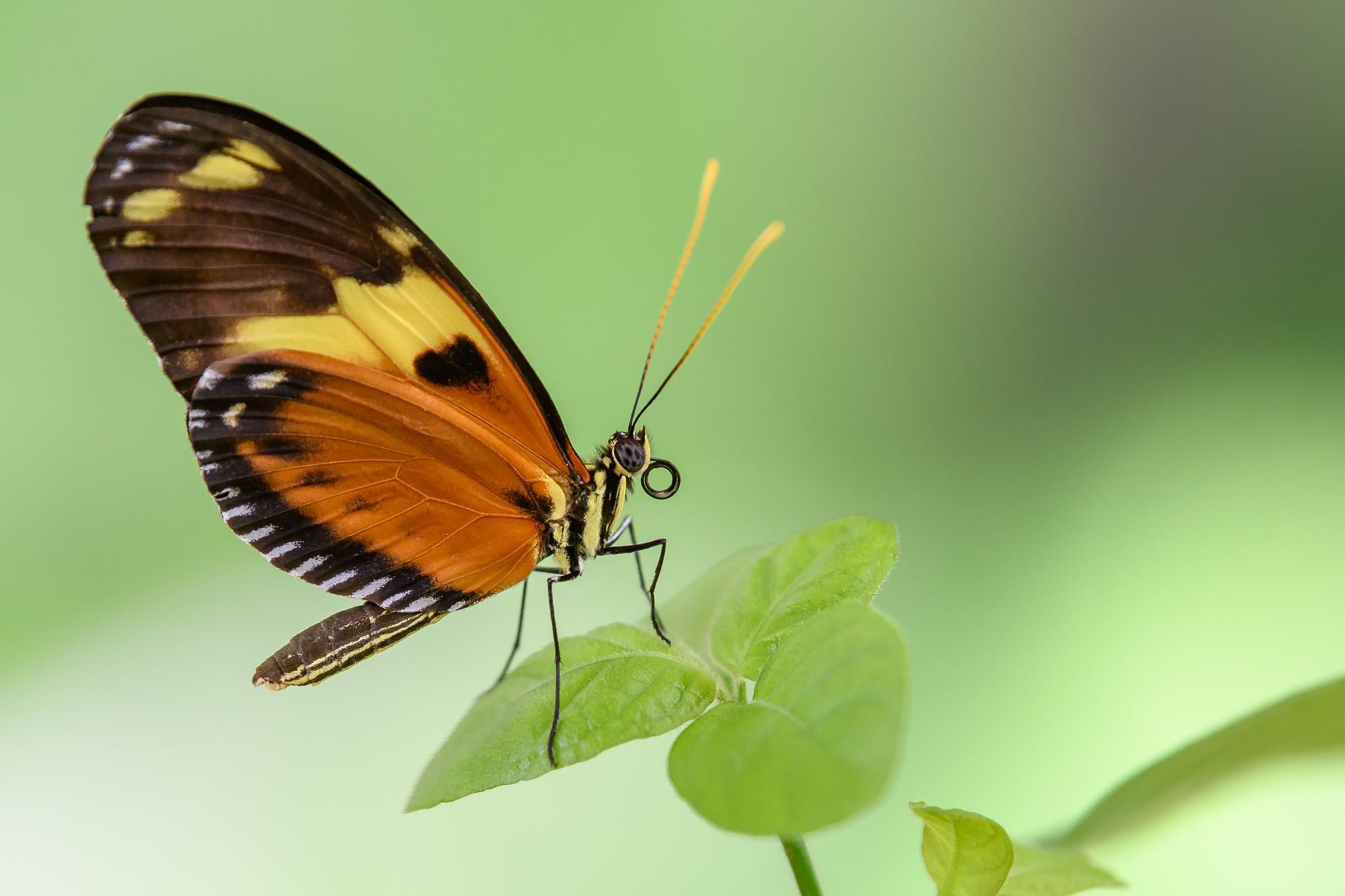 Butterfly 2 by Steve Aicinena