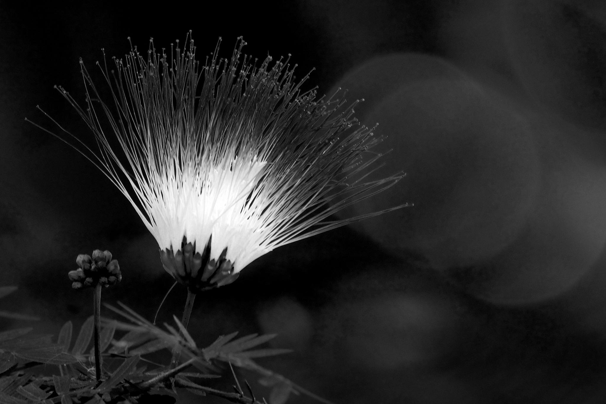 Flash of Light by Steve Aicinena
