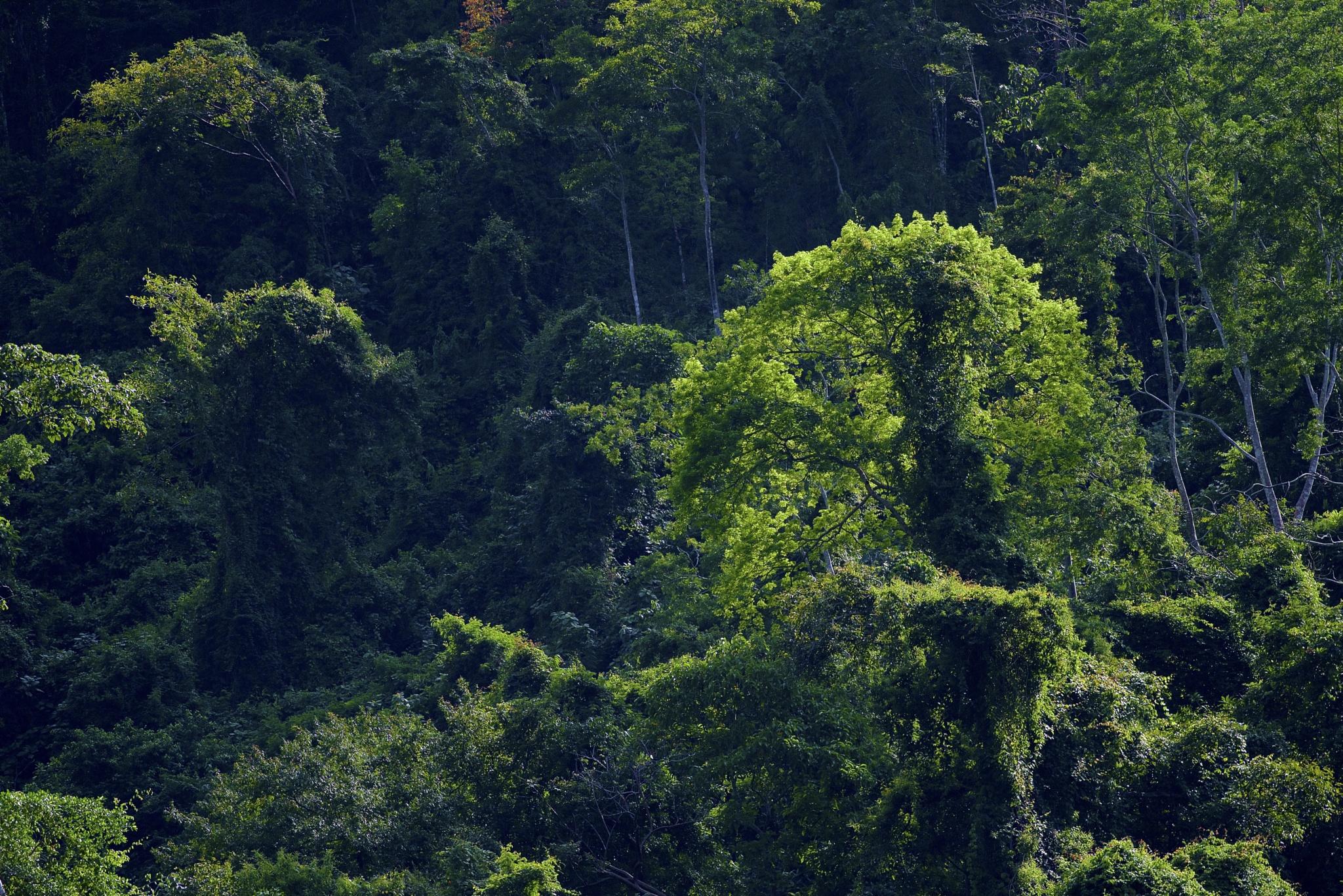 Costa Rican Rainforest by Steve Aicinena