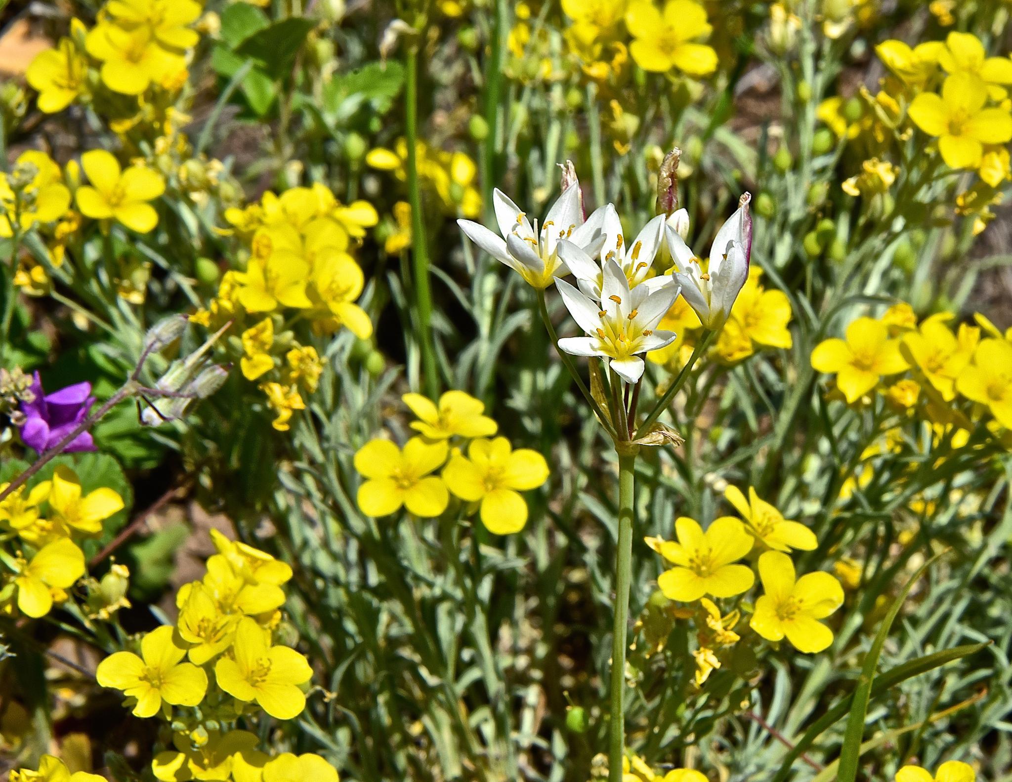 West Texas Wildflower Boquet by Steve Aicinena