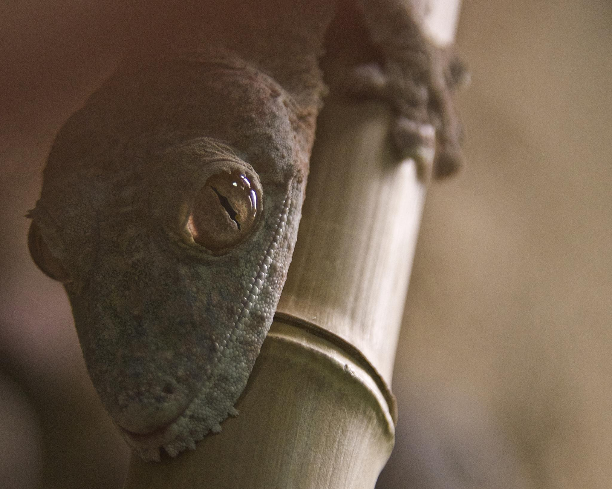 Hanging Eye by Steve Aicinena