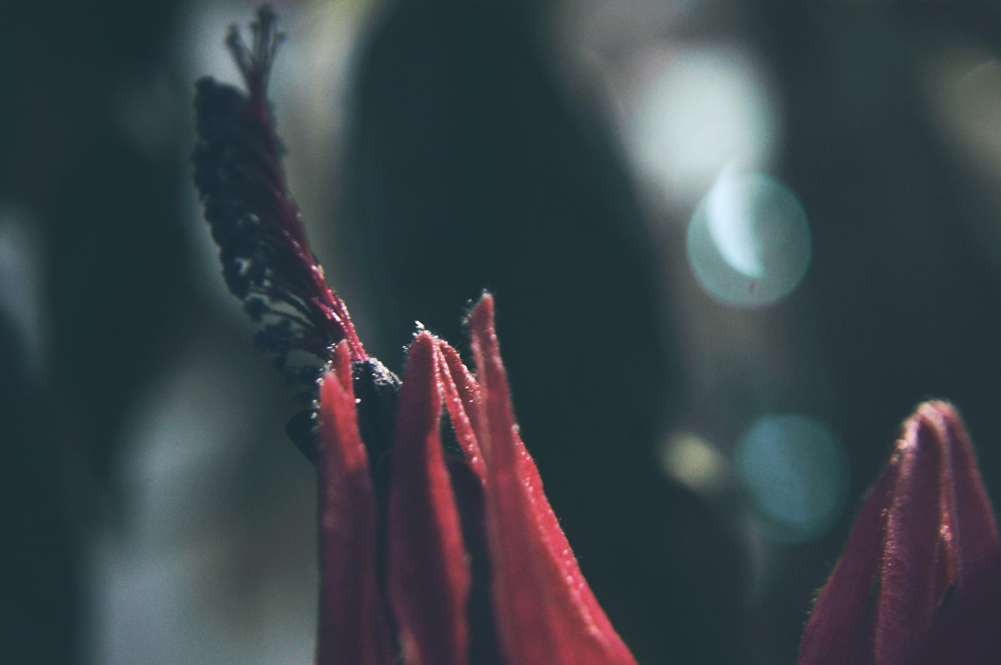 Ah..blooming in the dark by Yoko D