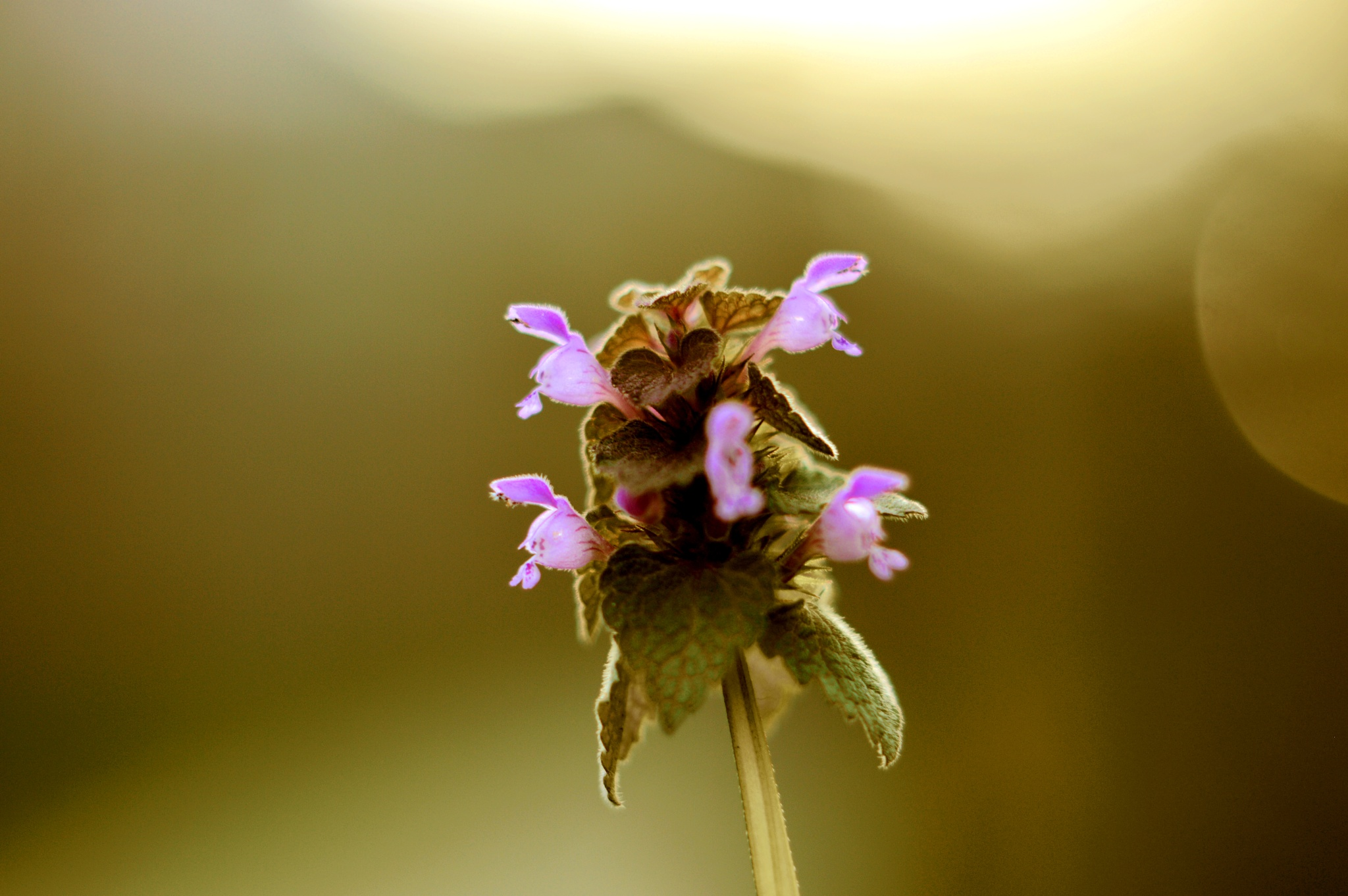 Ah..tiny flowers in gold light by Yoko D