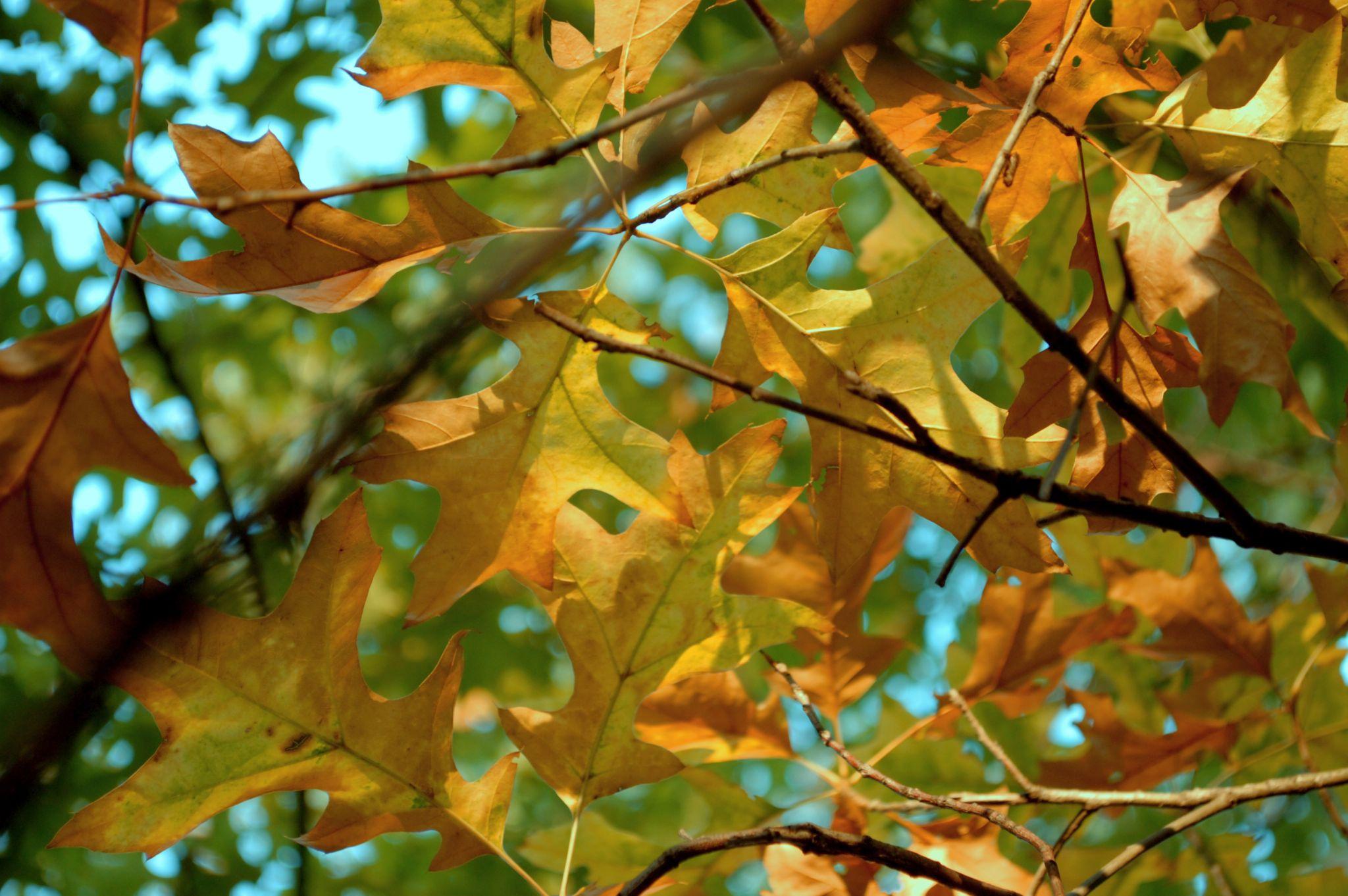 Autumn leaves  by Yoko D