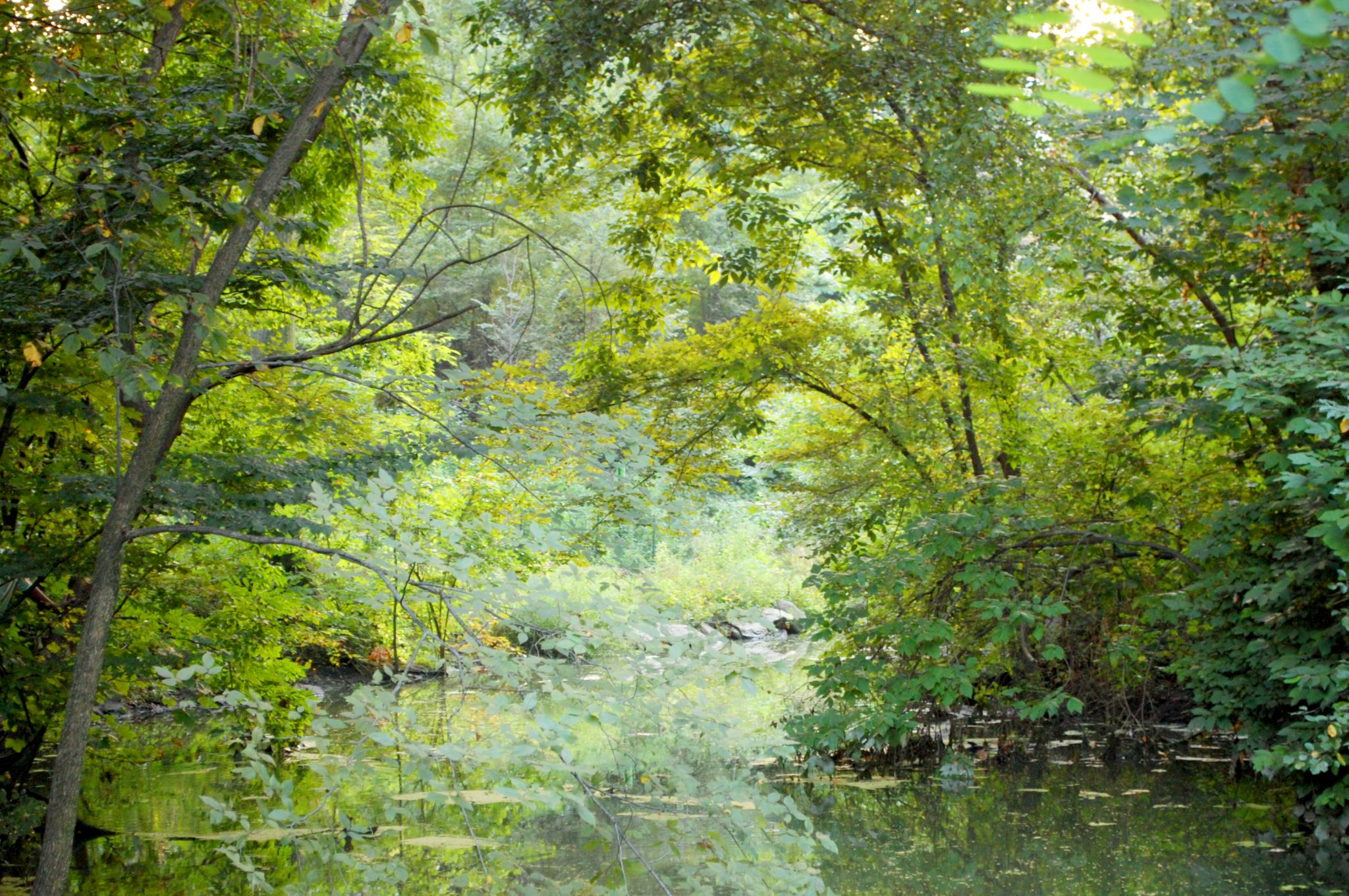 Pond by Yoko D