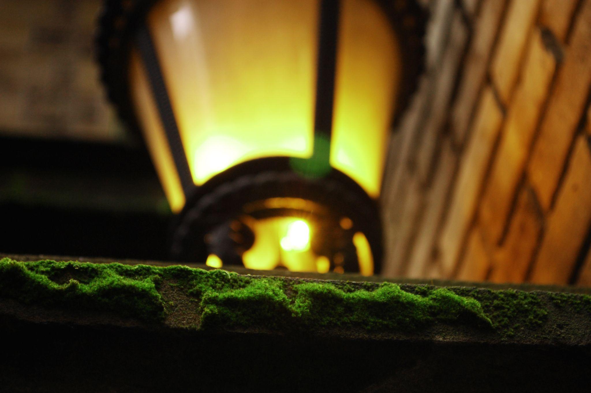 Moss and street lamp by Yoko D