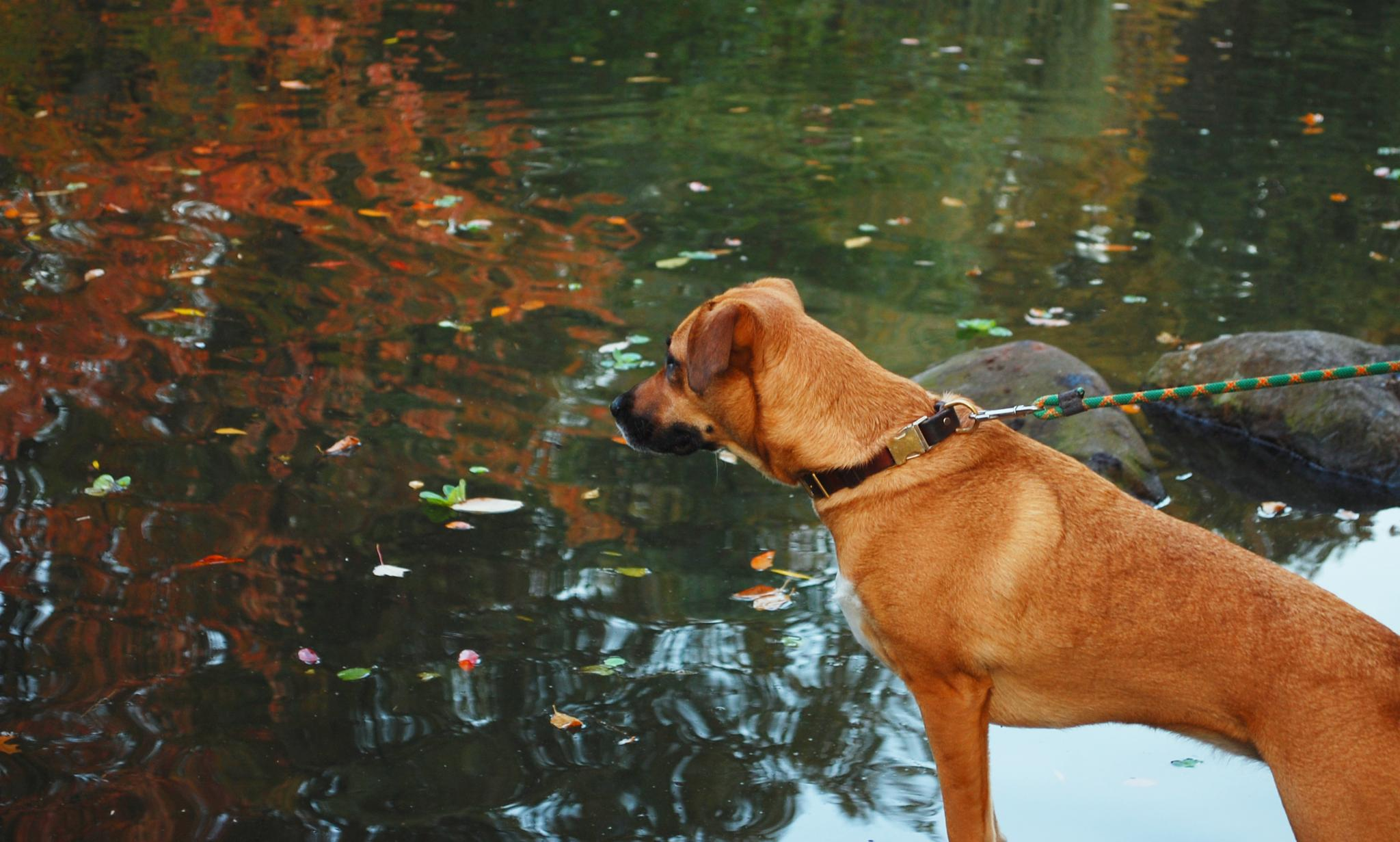 I can see fish. by Yoko D