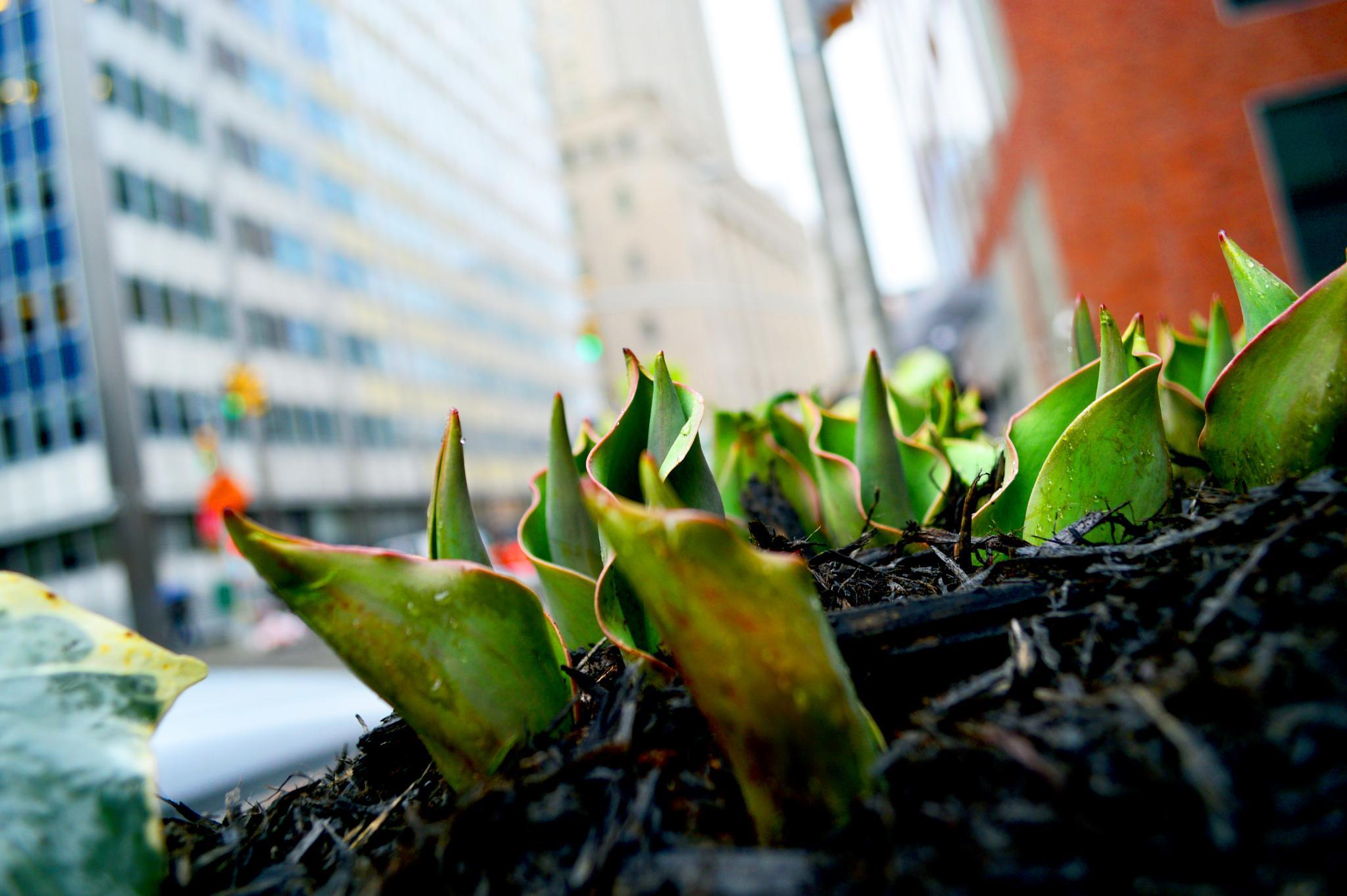 Ah..spring in Manhattan by Yoko D