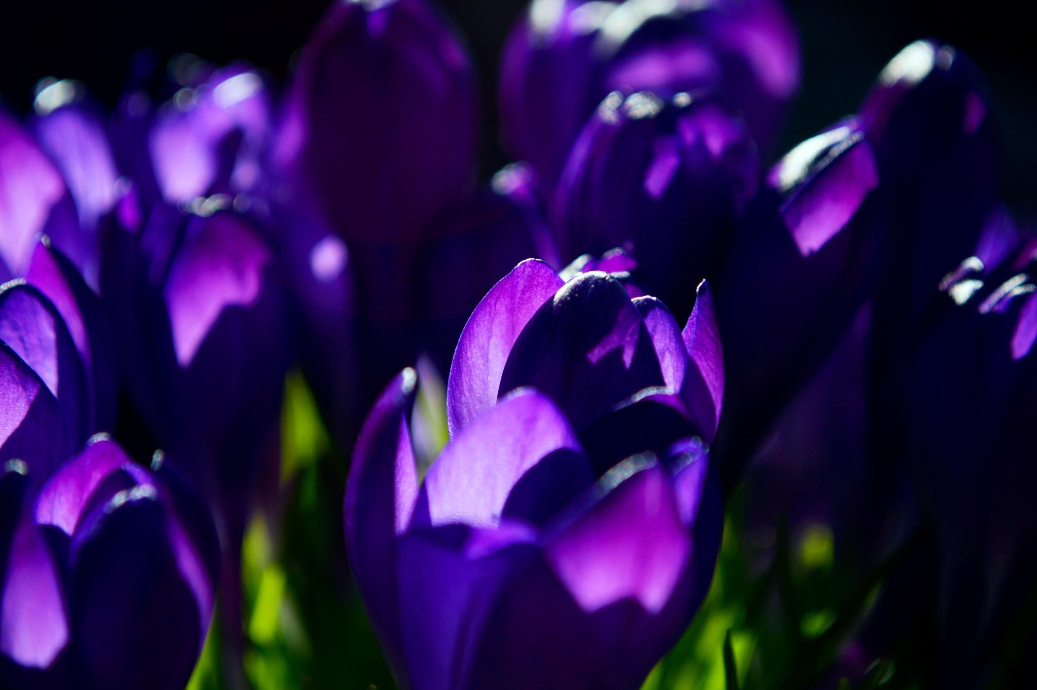 Ah..pretty purple by Yoko D