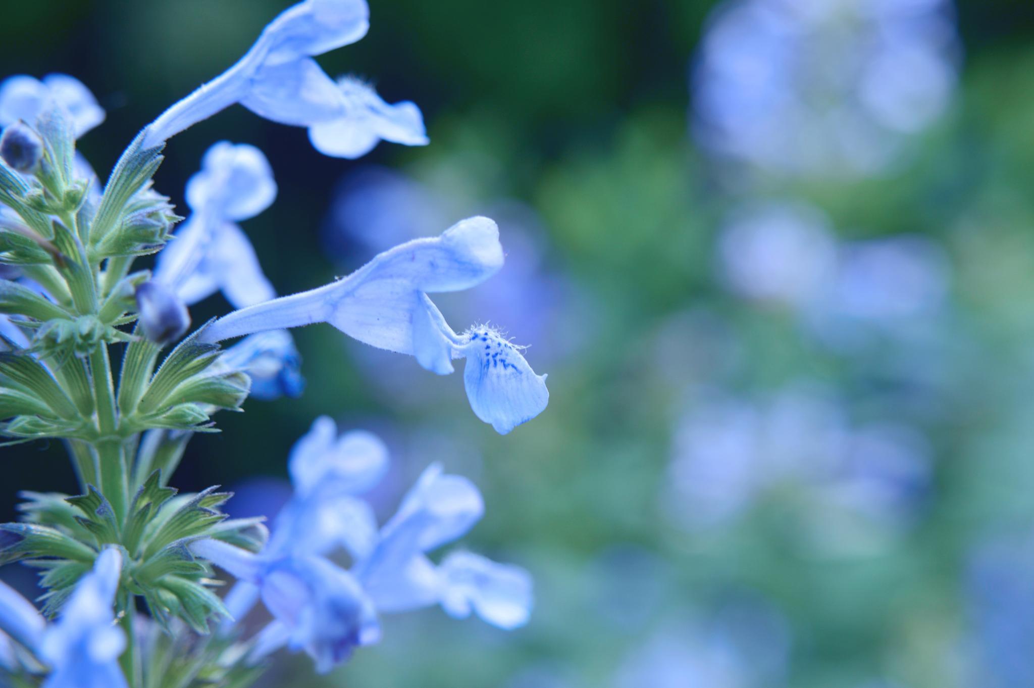 Ah..mint blue :) by Yoko D