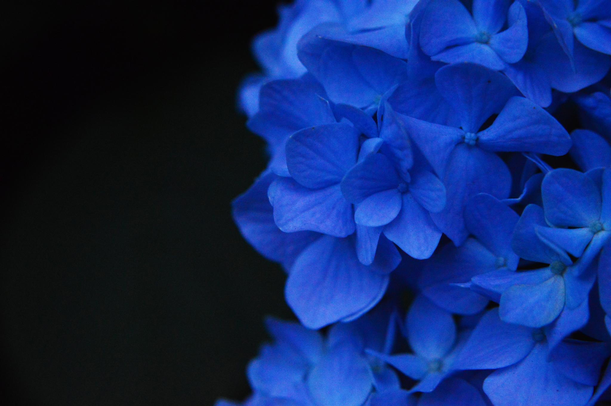 Photo in Nature #deep #blue #flower #rain #dark #forest #park #garden #sun #light #nature #macro #ny #city #new york #urban #summer #night