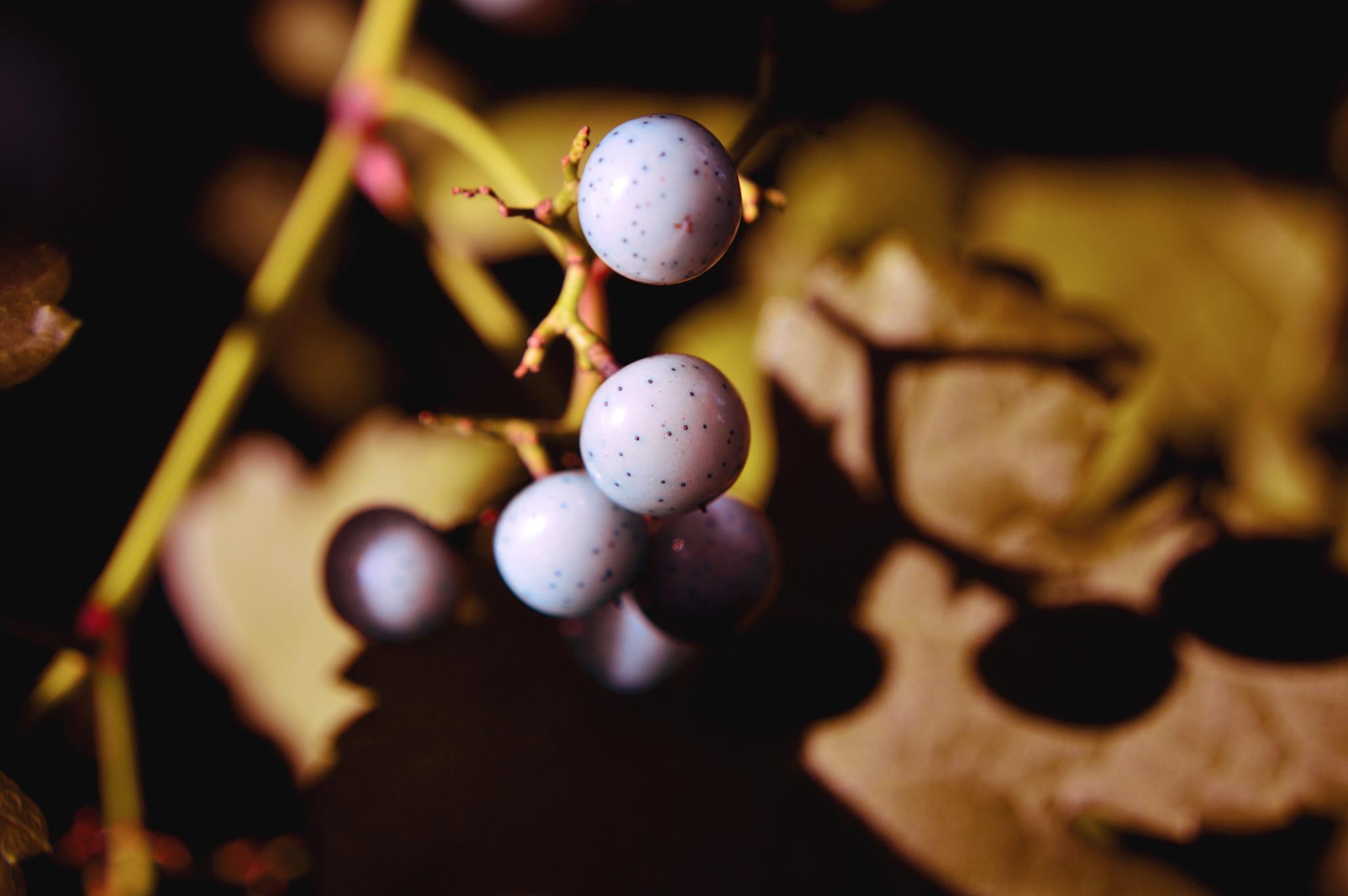Ah..berries and shadow by Yoko D