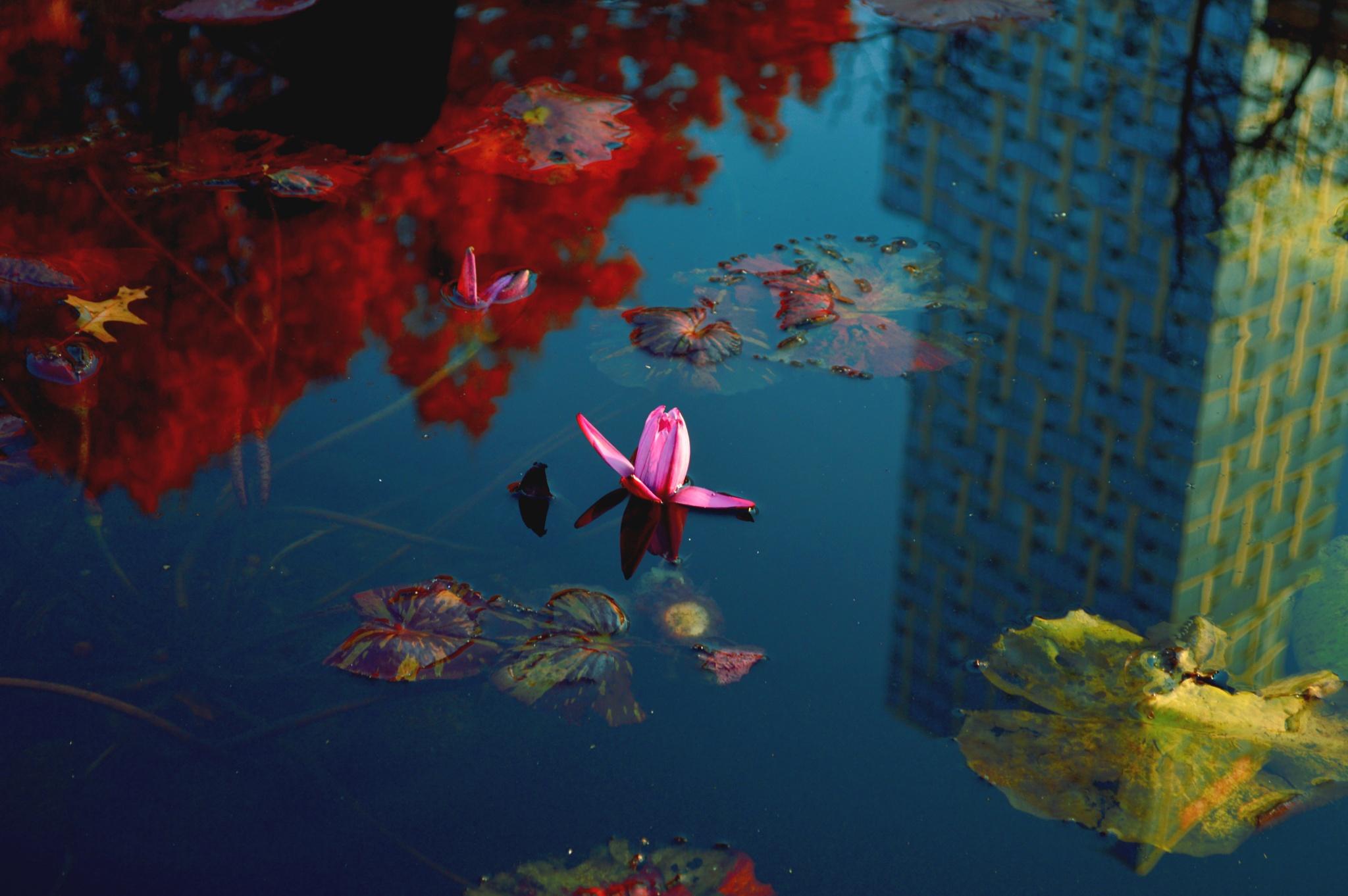 Ah..autumn reflection by Yoko D