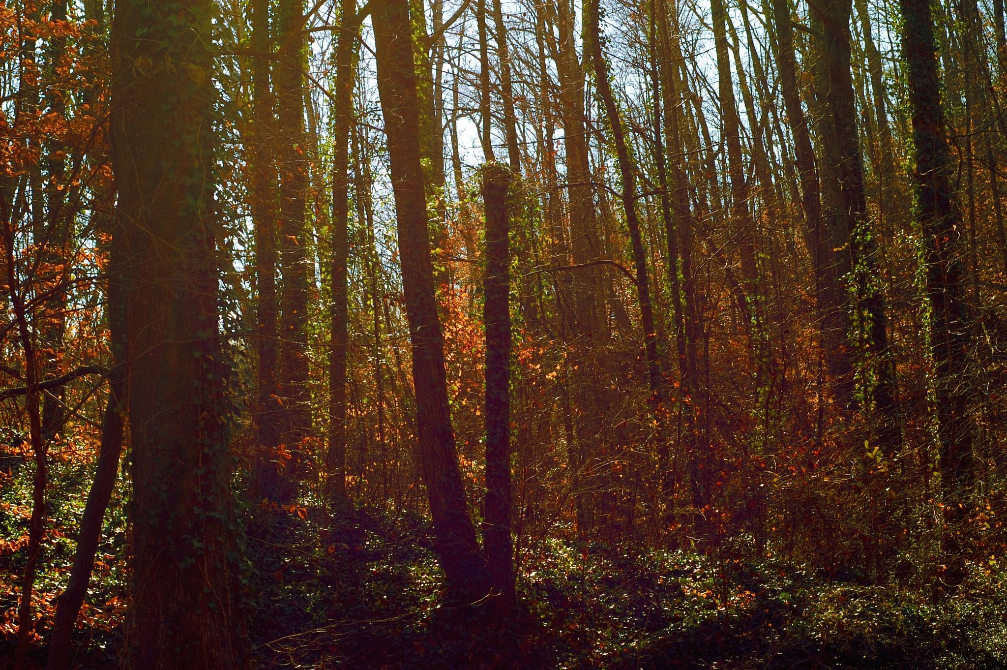 Ah..smokey forest by Yoko D