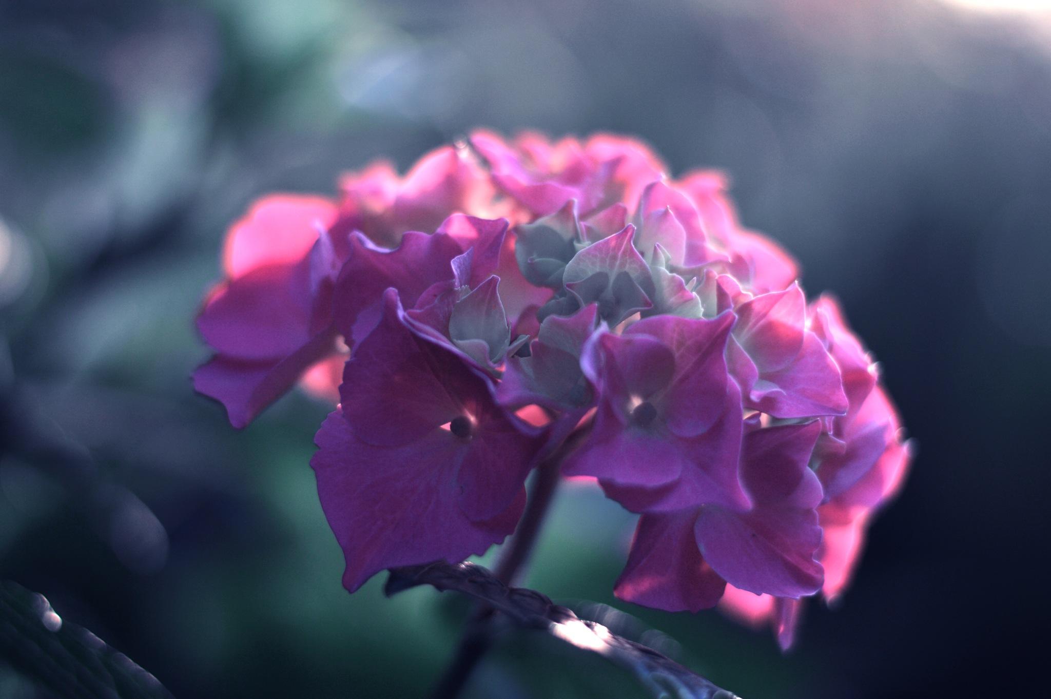 Ah...pink! by Yoko D