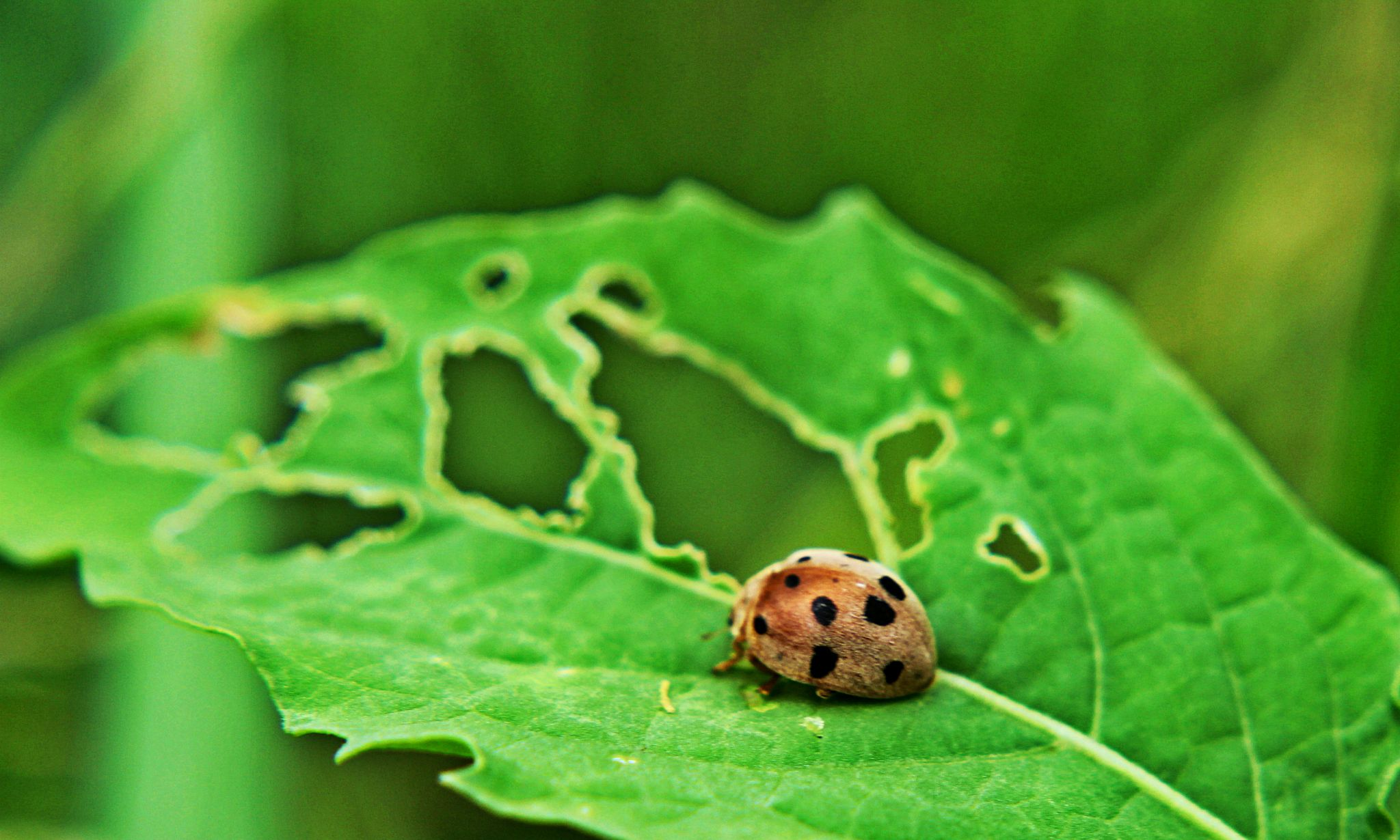 Ladybird  by Rasel Ahmed