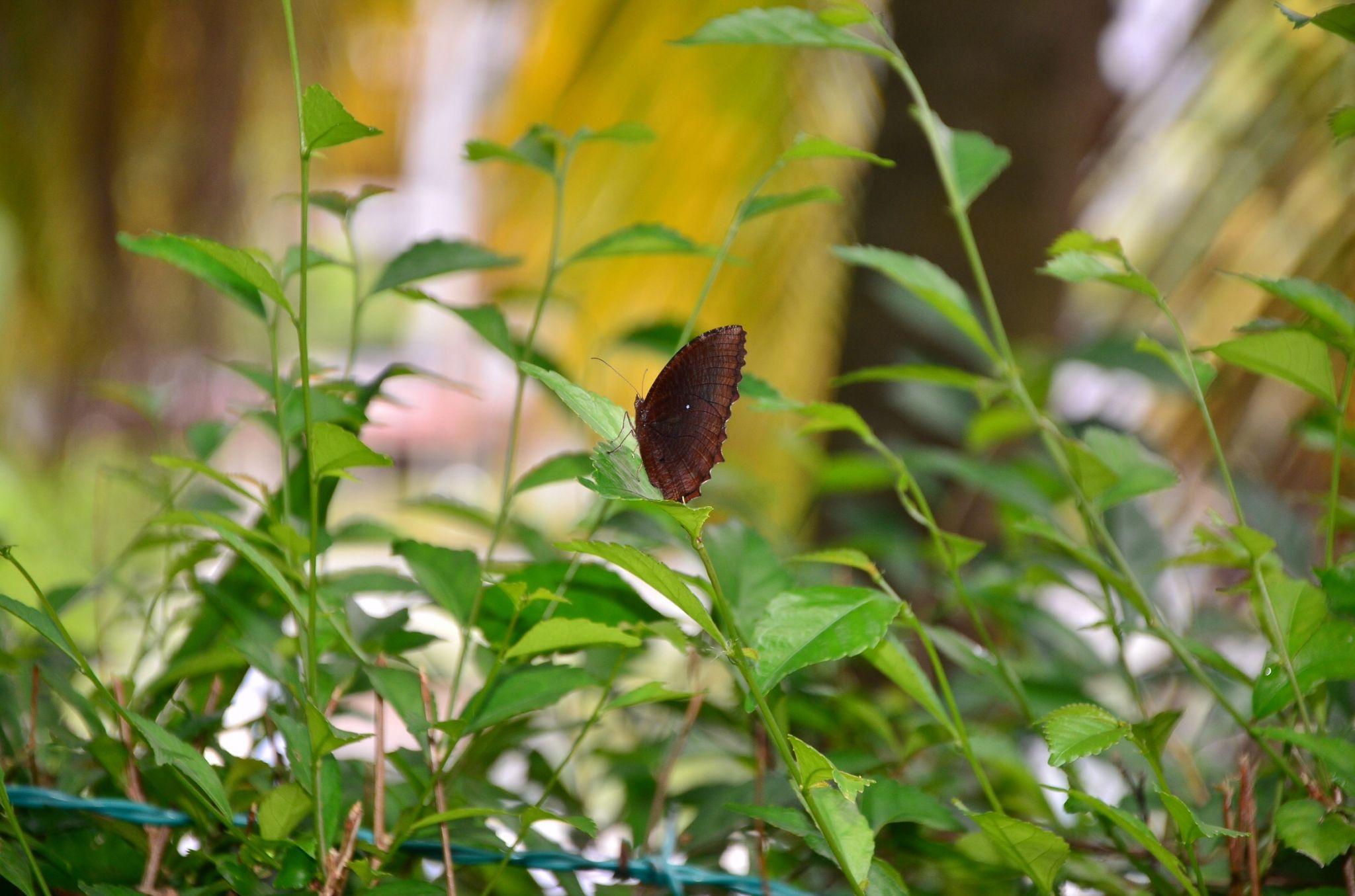 Butterfly by stefnigel