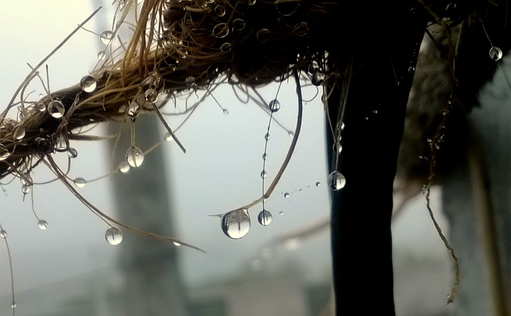 bubbles :) by Vamshi Balboa