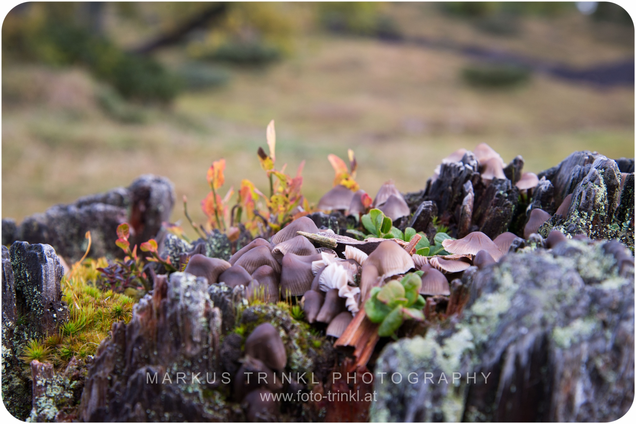 little vegetation by MT Photography