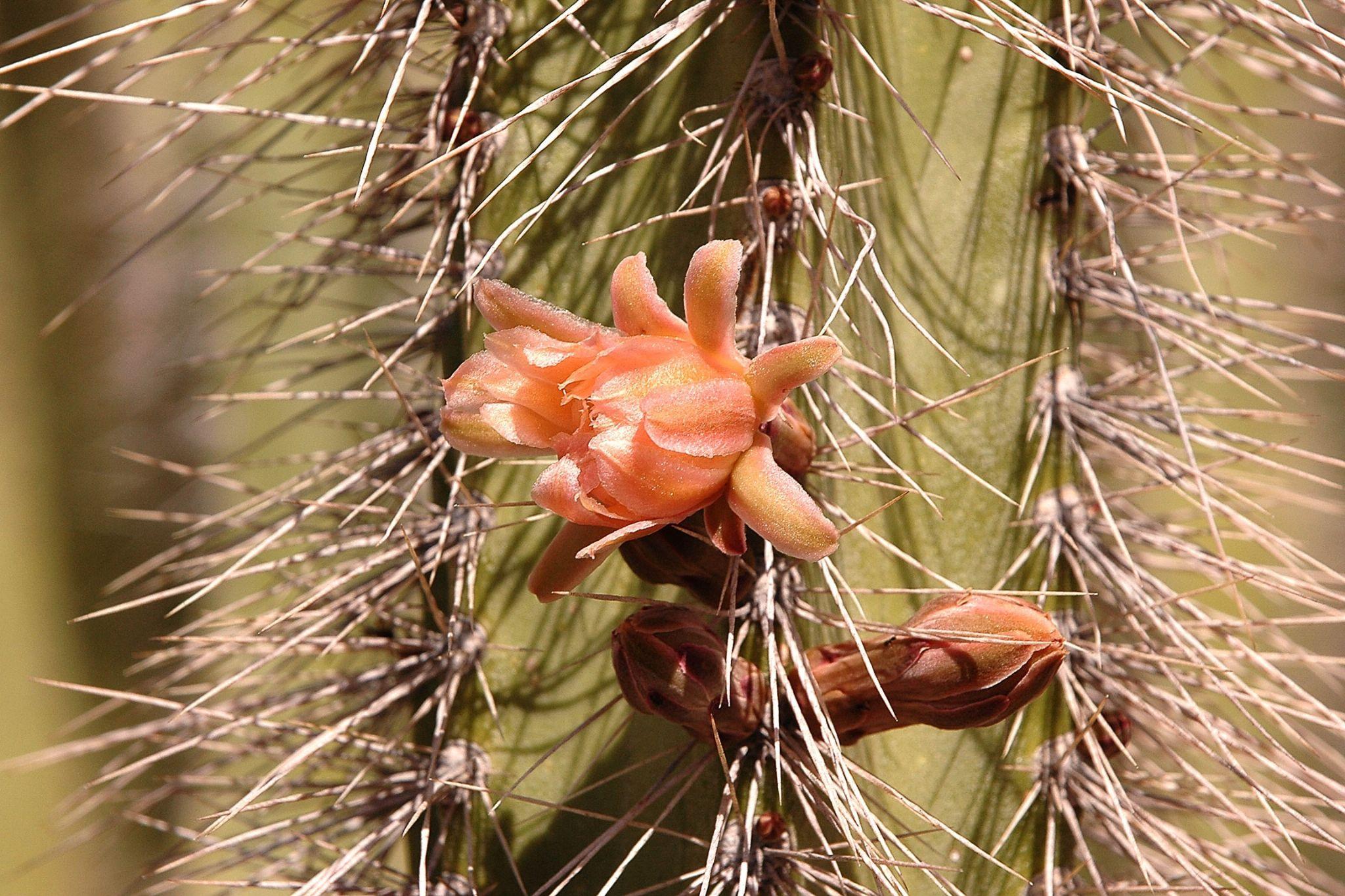 Cactus by Richard Hood