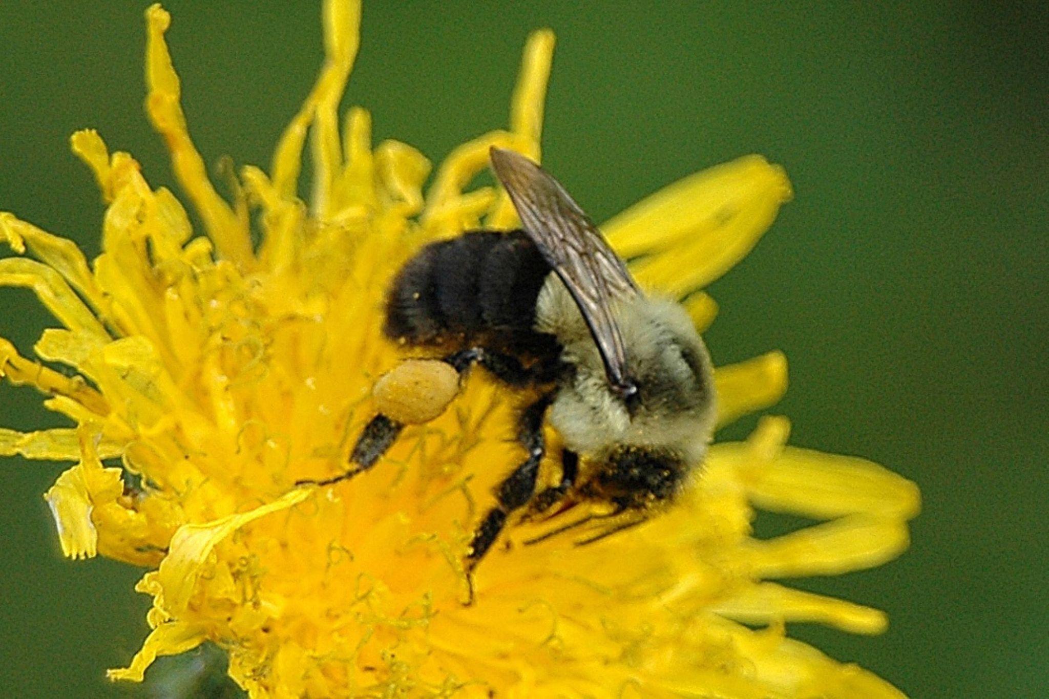 Bee by Richard Hood