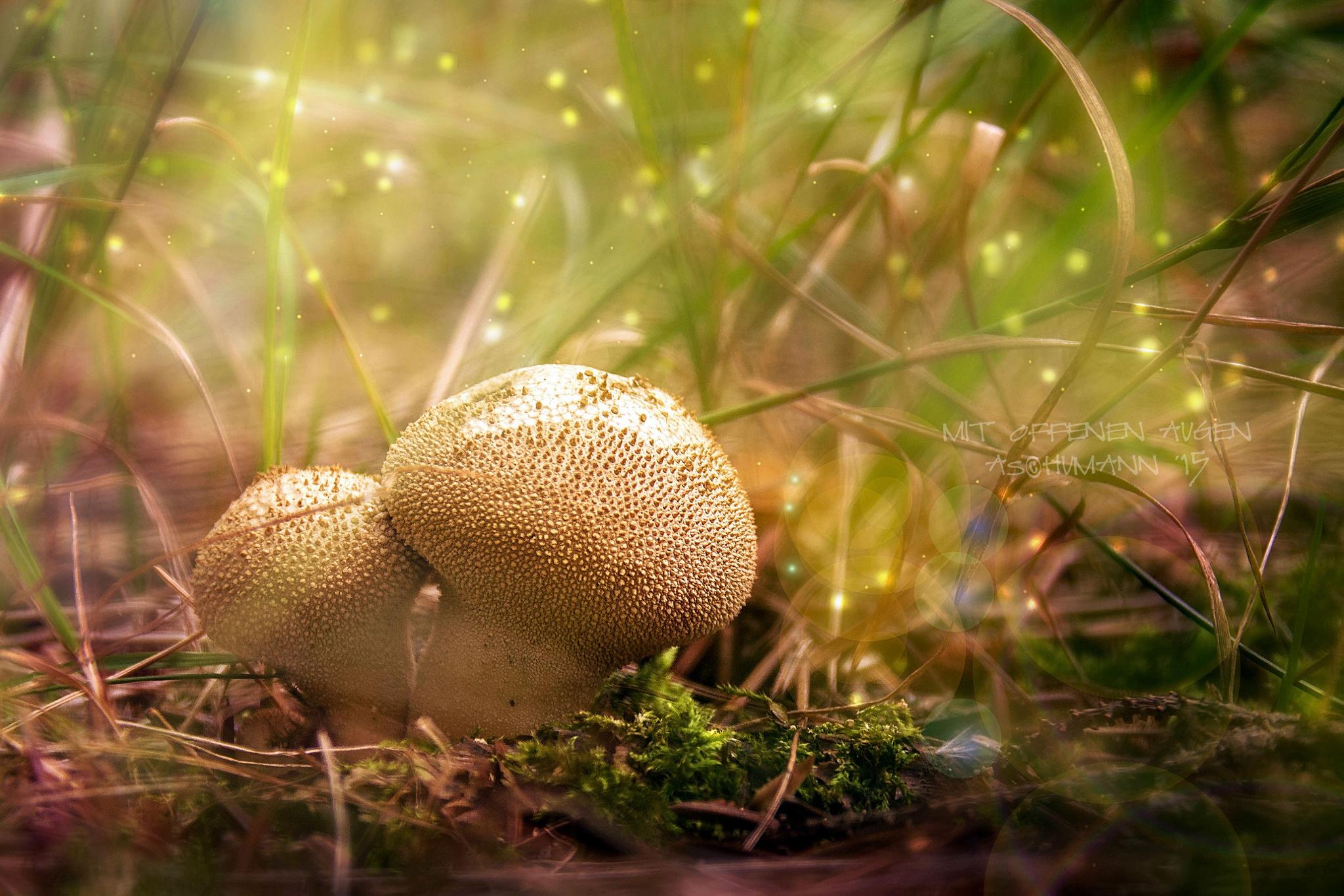 ...when the mushrooms grow by Annett Schumann