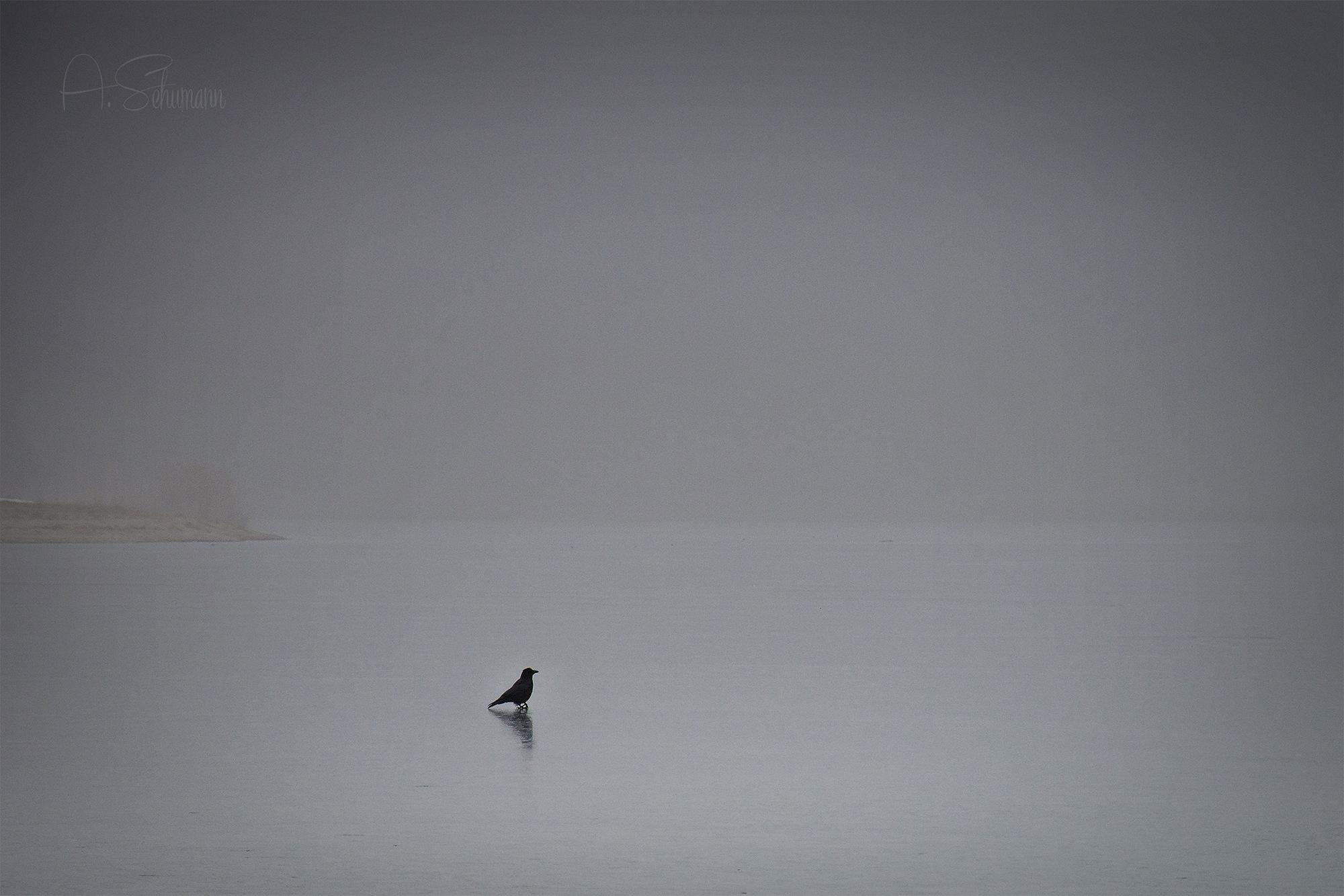 foggy today by Annett Schumann