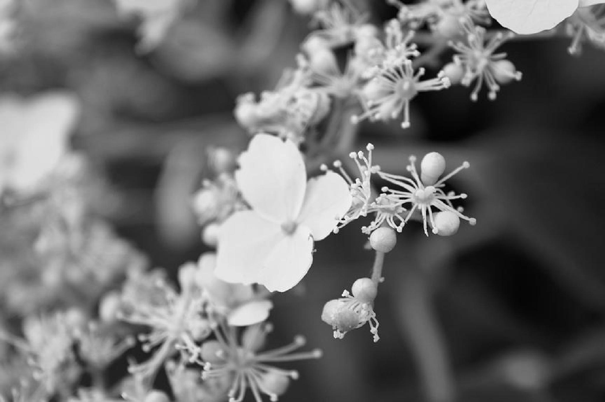 white flower by Do`S Photography