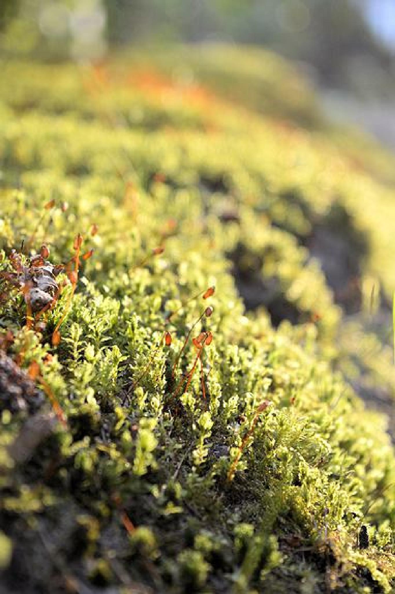 moss by Do`S Photography