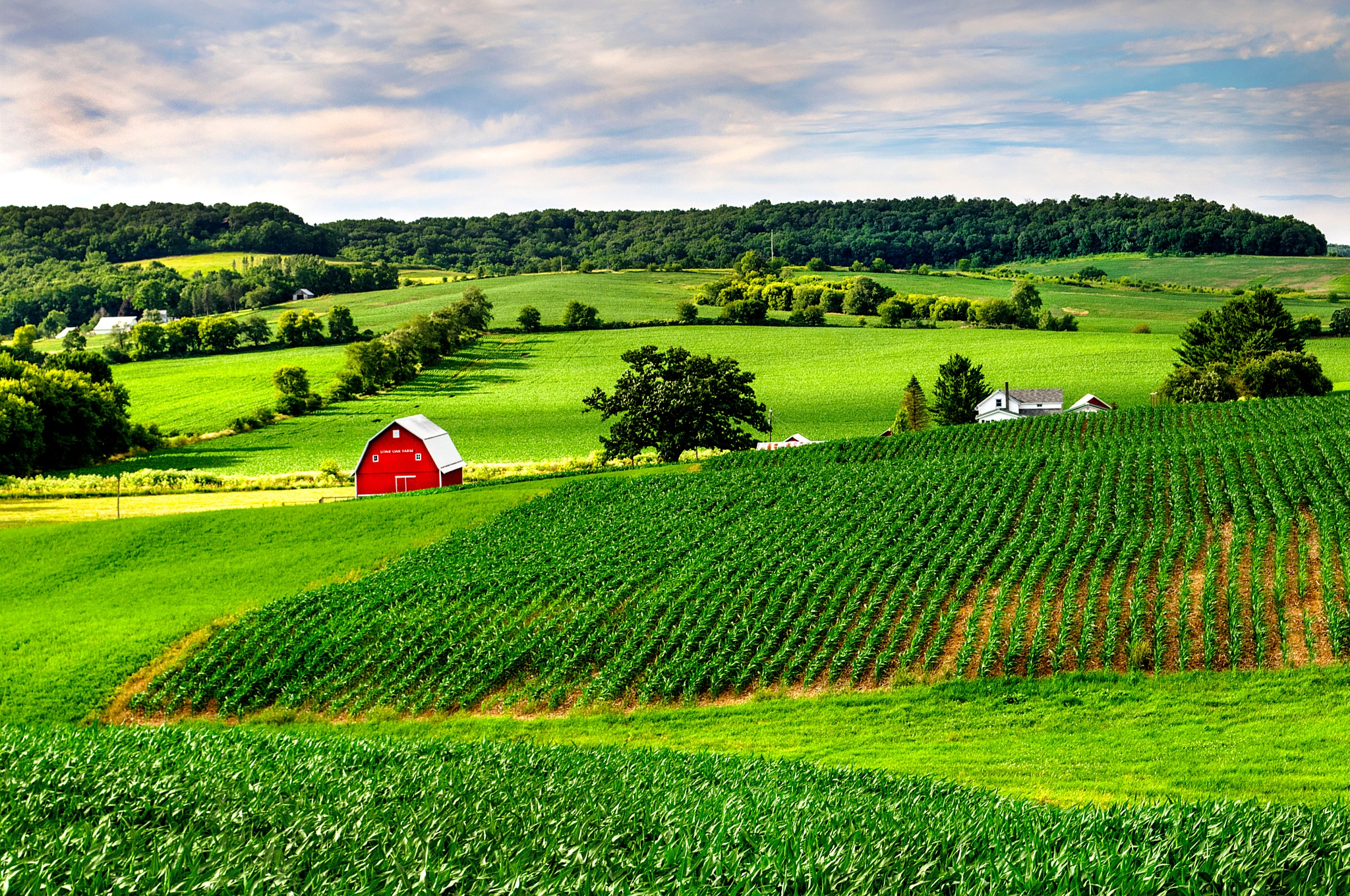 Lone Oak Farm by J. Philip Larson Photography