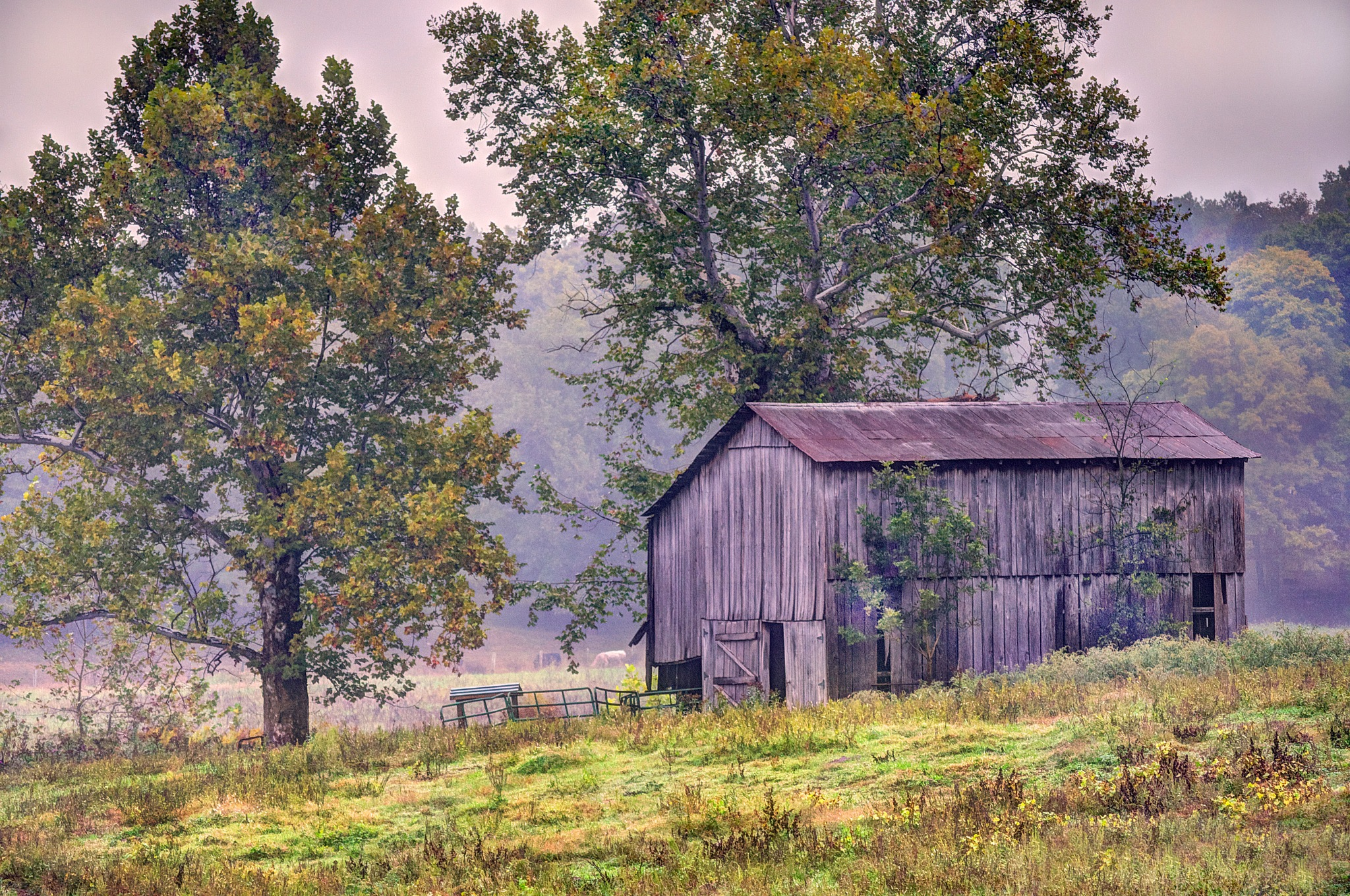 Barn in the Mist by J. Philip Larson Photography